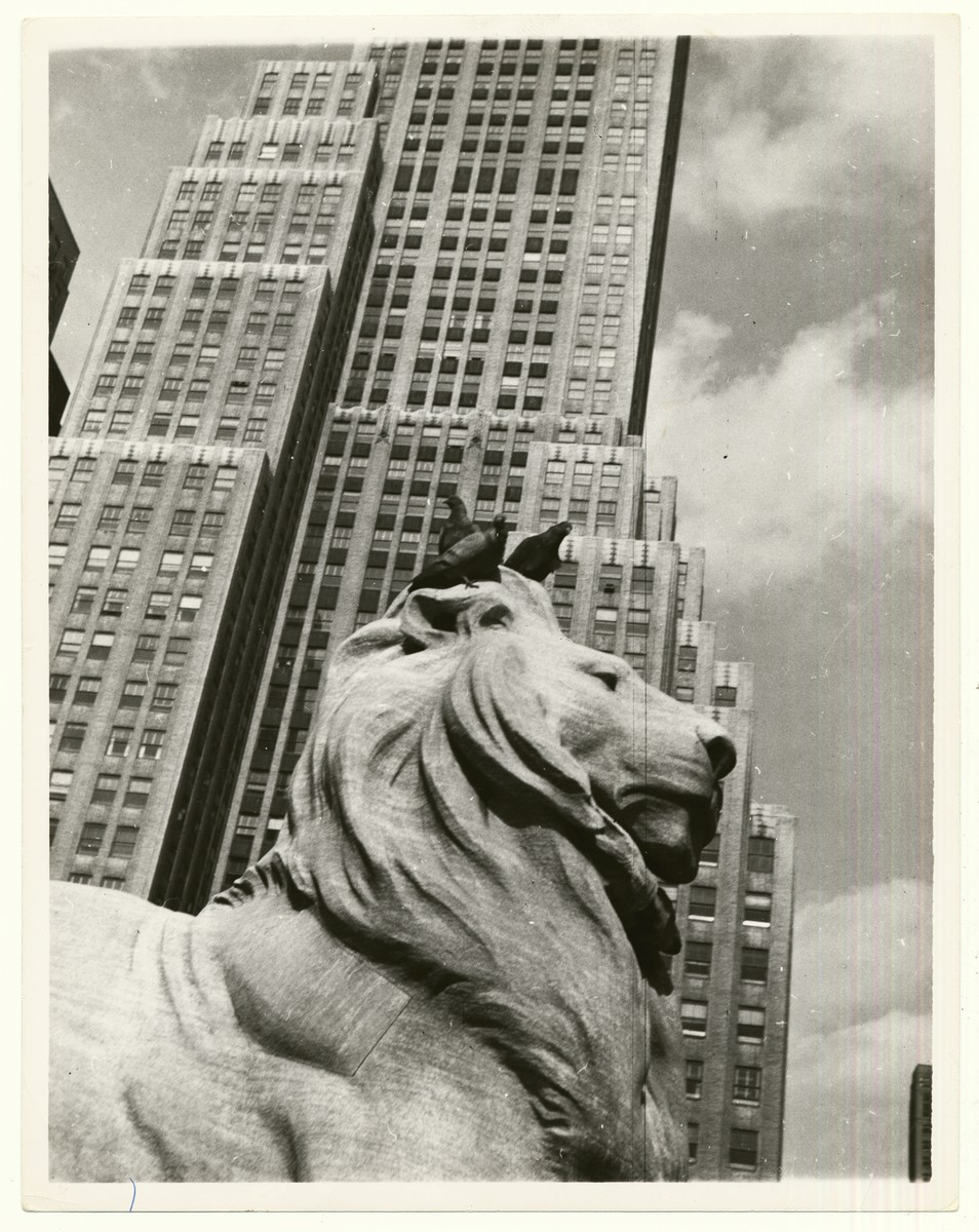 Three pigeons perch on the head of a lion in front of the New York Public Library.  Three pidgeons [sic] on head of lion in front of public library, New York.""