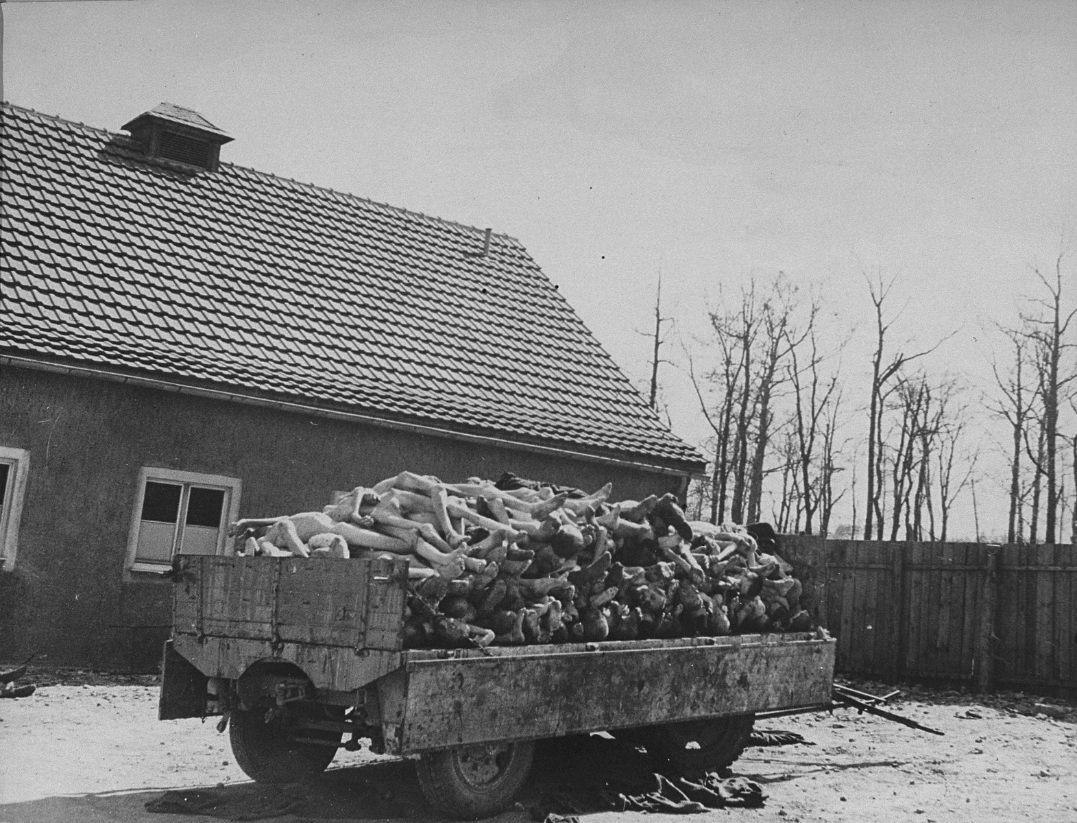 A wagon is piled high with the bodies of former prisoners in the newly liberated Buchenwald concentration camp.