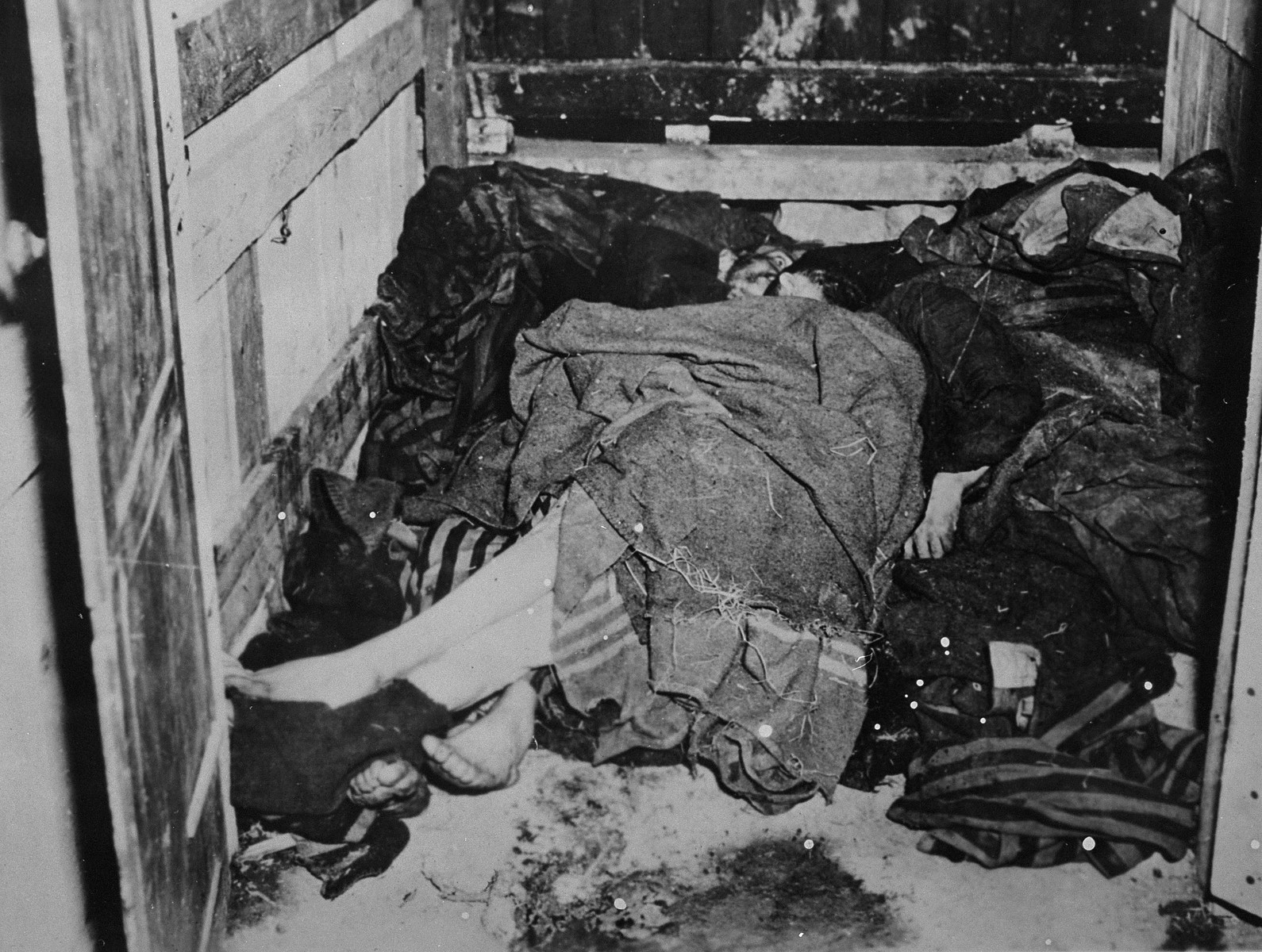 Corpses in Buchenwald after liberation.