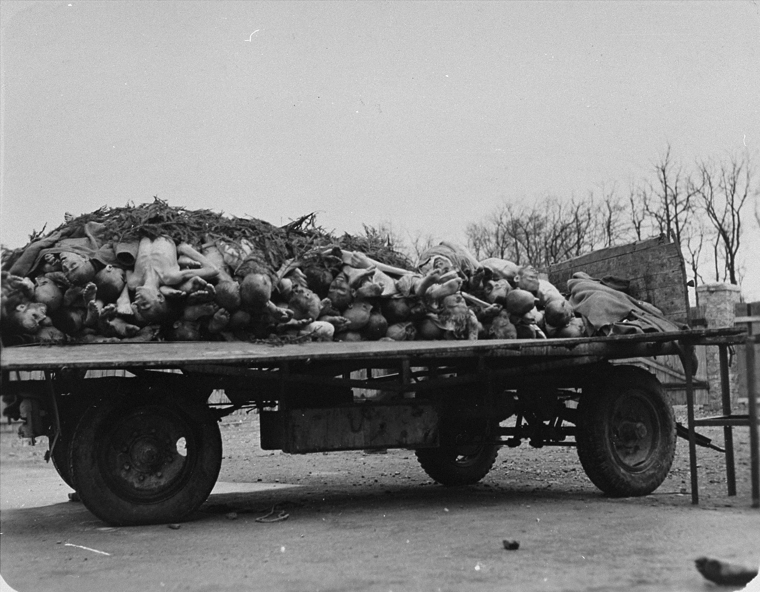 A wagon in Buchenwald loaded with corpses to be buried.