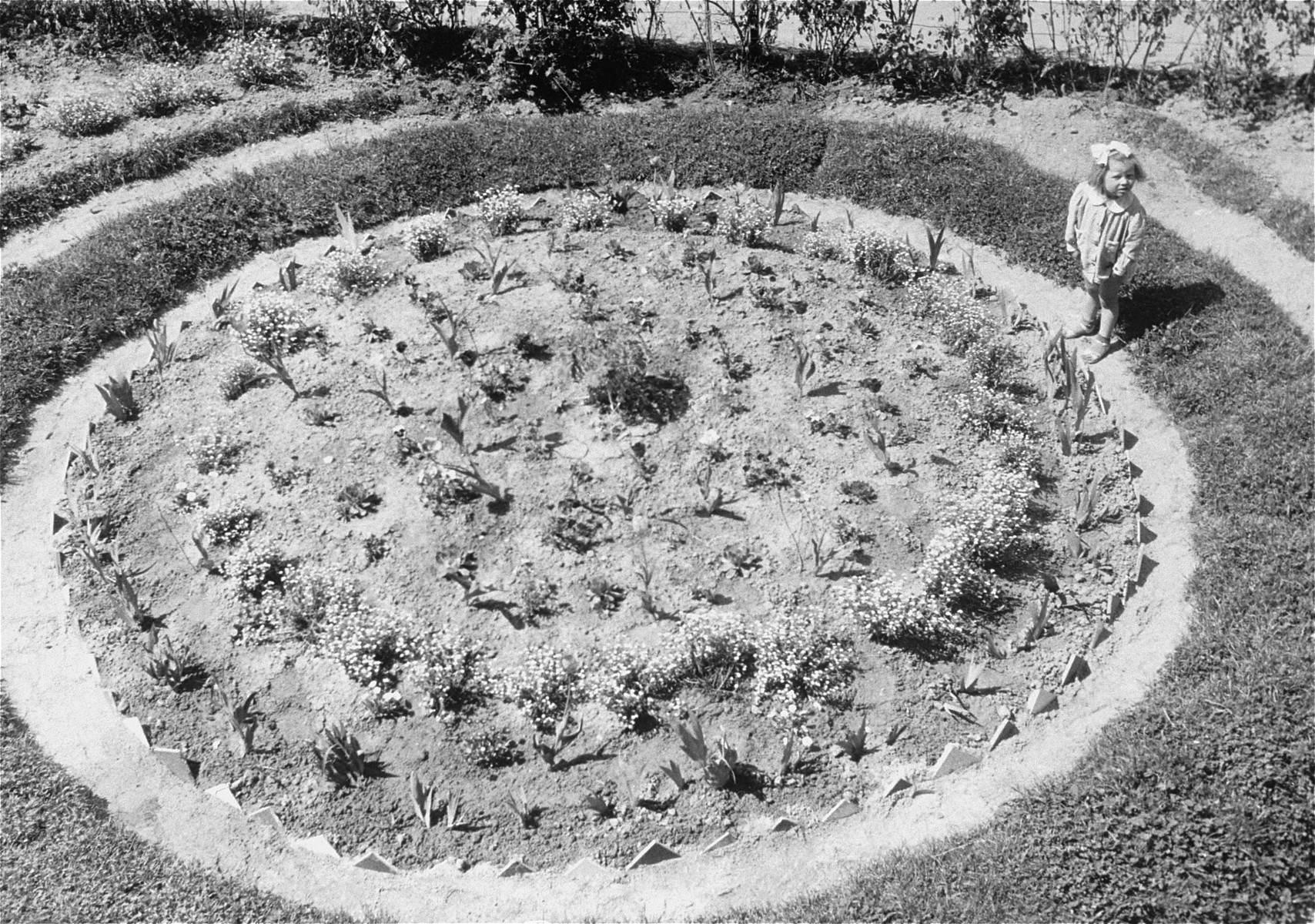 A small child stands in a garden at Bindermichl DP camp.
