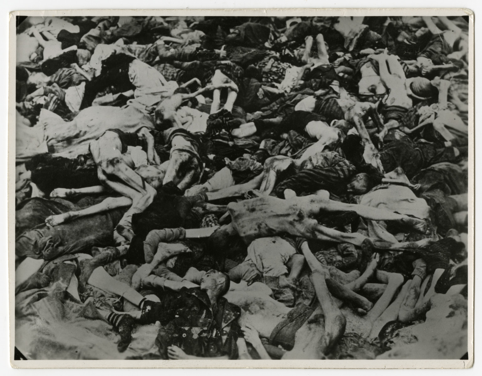 Corpses in an open mass grave in Ohrdruf.