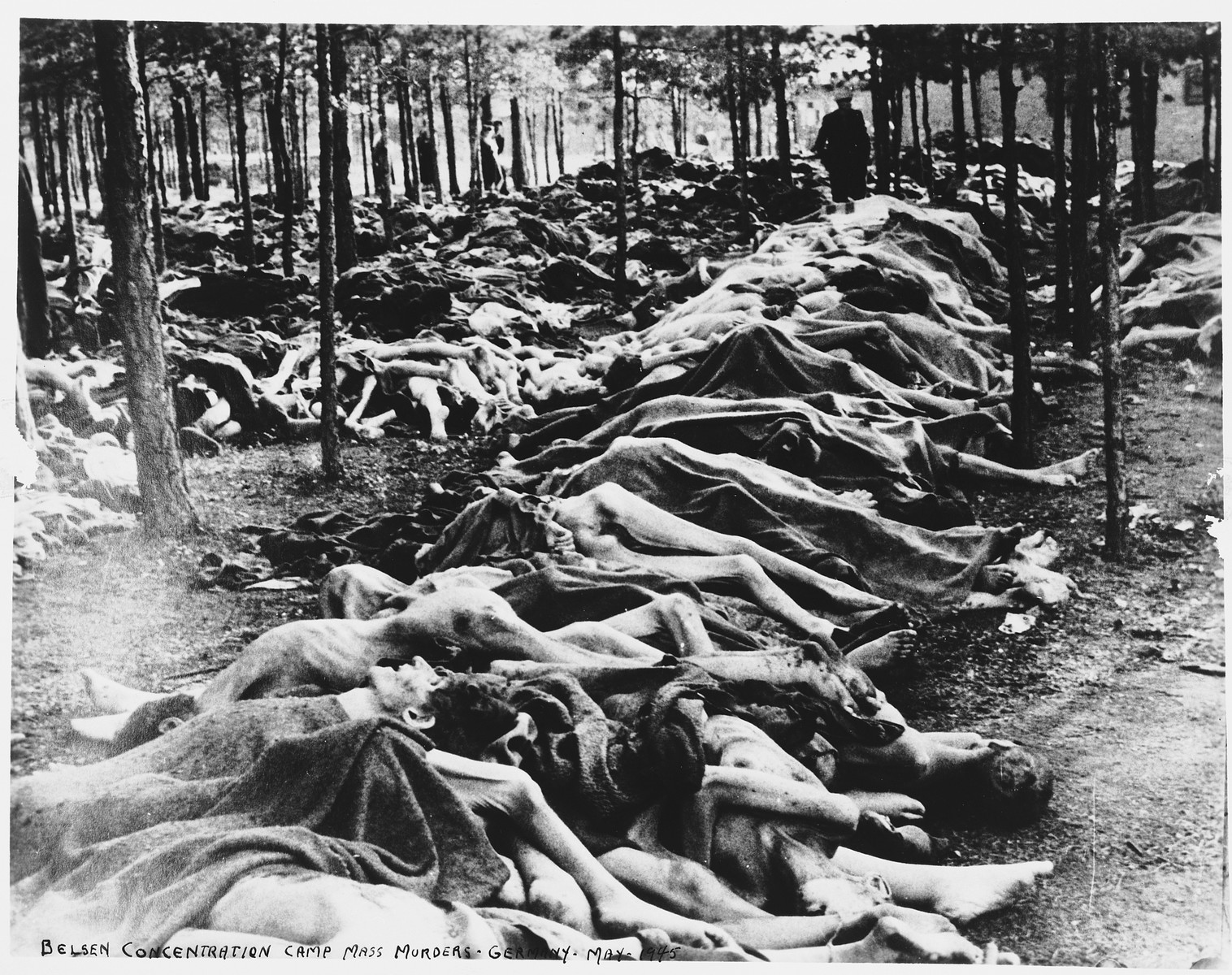 A man walks through a wooded area near Bergen-Belsen filled with rows of corpses of prisoners who perished there.