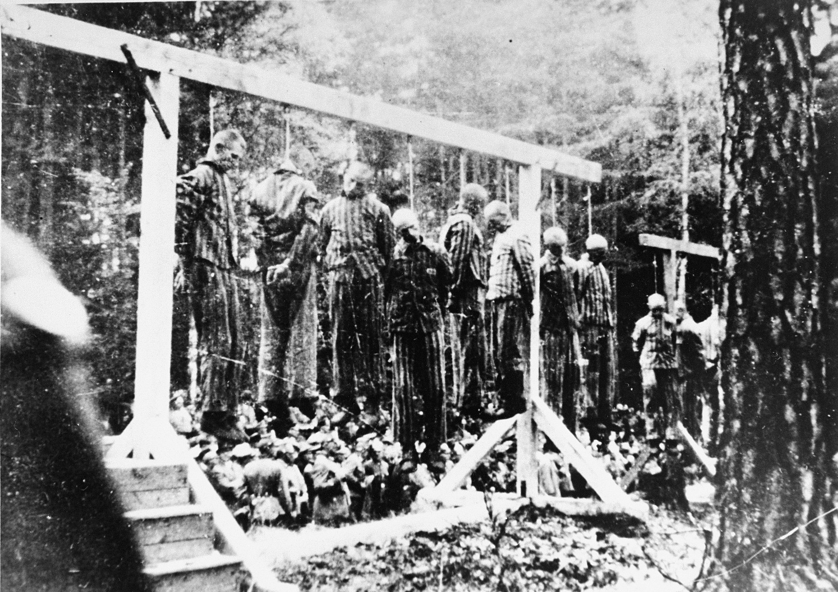 "Twenty concentration camp prisoners, most of them Jewish, hang on gallows in a forest near Buchenwald after the murder of a German policeman.  Rules regarding the punishment of prisoners were made theoretically uniform in German concentration camps by Theodor Eicke's ""Camp Ordinance"" (Lagerordnung). Written during his tenure as the commandant of Dachau in 1933-1934, the ""Ordinance"" stipulated specific punishments for certain misdeeds within the camp.  However, although serious corporal and capital punishments required the permission of the central SS authorities in Berlin, the camp commandant often acted as he pleased.  After accusations had been made and judged, ""regular punishments"", including the withholding of food, hard labor, solitary confinement, beating, and execution, were announced at the daily roll-call (appelle), and carried out immediately.  If a prisoner injured the SS in any way, collective punishments were often the result, as in this photo where 20 innocents were hanged in retaliation for the killing of a guard or policeman.  The details of the episode behind this picture are not known, but there is another like it:   On 13 May 1938, two Buchenwald prisoners named Bargatzky and Forster made an escape; rumors had it that during their flight they had killed a guard named Kallweit, near the camp sewage plant. The SS responded to the incident by severe collective retaliations, the least of which was a ban on smoking throughout the camp and the withholding of food on Sundays.  The SS also executed several members of the work detail to which Bargatzky and Forster had belonged, while 15 other members of the detail received 25 lashes.  Several other innocents were beaten to death, including a Communist prisoner from Leipzig named Hoeritzsch.  Eventually, Bargatzky and Forster were found and hanged in the Buchenwald Appellplatz in the presence of all the inmates.  Sources: ""Anklegeschrift in dem Verfahren Koch, Ilse, wegen Mordes u.a."" in Justiz und NS-Verbrechen, ed. Adelheid L. Rueter-Ehlermann and C.F. Rueter, 22 vols. (Amsterdam: University Press Amsterdam, 1968-81), vol. 7, nr. 262; ""Der 13 Mai 1938--ein schwarzer Tag im Lager,"" reprinted in Buchenwald: Mahnung und Verpflichtung, 1st ed. (Frankfurt: Roederberg, 1960), 181-184."