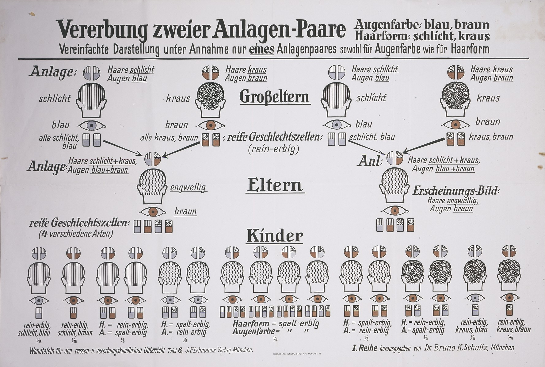 """A eugenics chart entitled: """"Hereditary traits passed down from two mates.  Simplified portrayal [of hereditary traits] given the assumption of only one pair of mates both for eye color and hair type.""""  The chart was published by Dr. Bruno K. Schultz, Munich."""