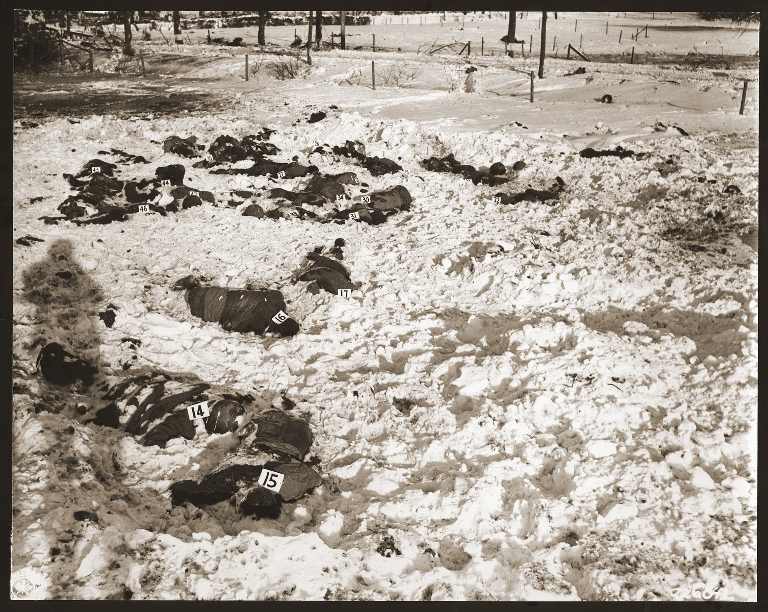 """Corpses of American soldiers killed by the SS in the Malmedy atrocity and identified by number lie in the snow.  The original caption reads """"Bodies of American soldiers lie in the snowy wastes in the vicinity of Malmedy, Belgium, shot down by Germans in a counter attack, after the Americans had surrendered."""""""