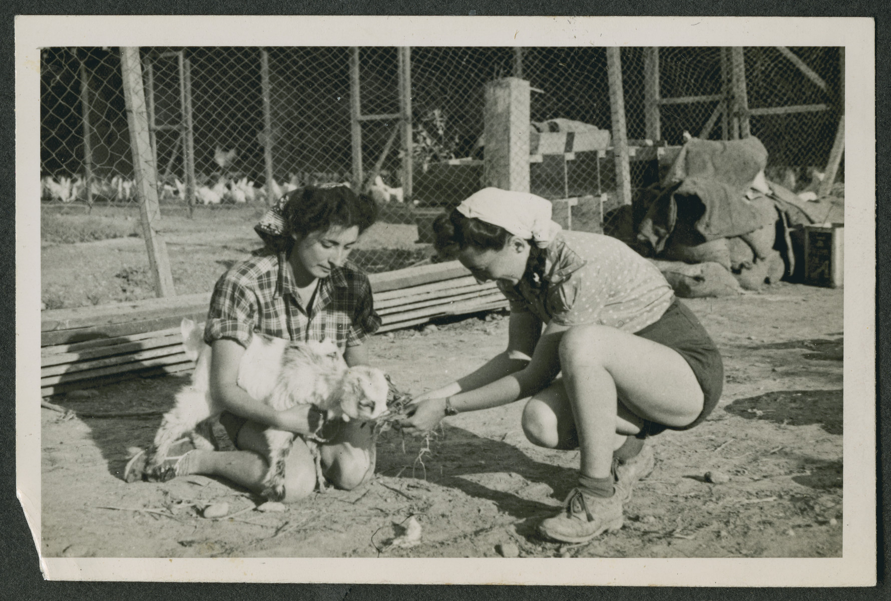 "Photograph from an album entitled, ""Hacshara Kidma Chile,""  documenting life on a postwar Shomer Hatzair Zionist agricultural collective in Chile.  Two young women feed a baby goat."