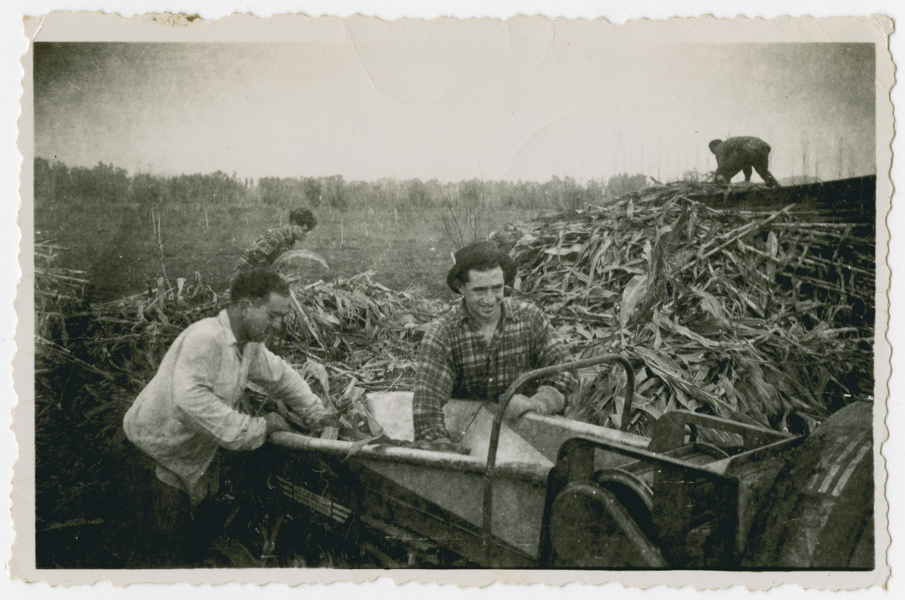 "Photograph from an album entitled, ""Hacshara Kidma Chile,""  documenting life on a postwar Shomer Hatzair Zionist agricultural collective in Chile.  Men feed crops into a silage cutter."