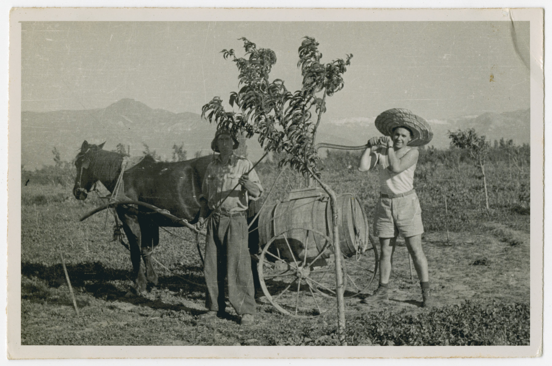 """Photograph from an album entitled, """"Hacshara Kidma Chile,""""  documenting life on a postwar Shomer Hatzair Zionist agricultural collective in Chile.  Young men spray a fruit tree with pesticides from a barrel on a horse-drawn cart."""