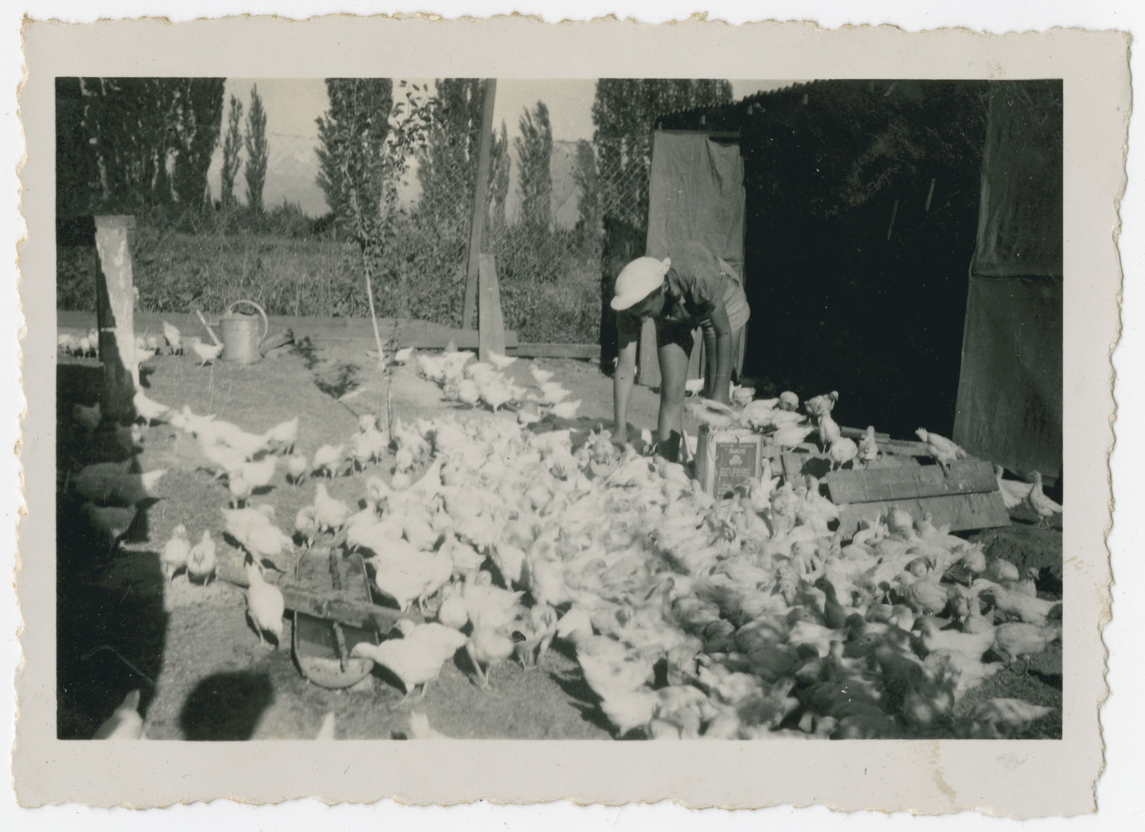 "Photograph from an album entitled, ""Hacshara Kidma Chile,""  documenting life on a postwar Shomer Hatzair Zionist agricultural collective in Chile.  A young woman tends to the chickens."