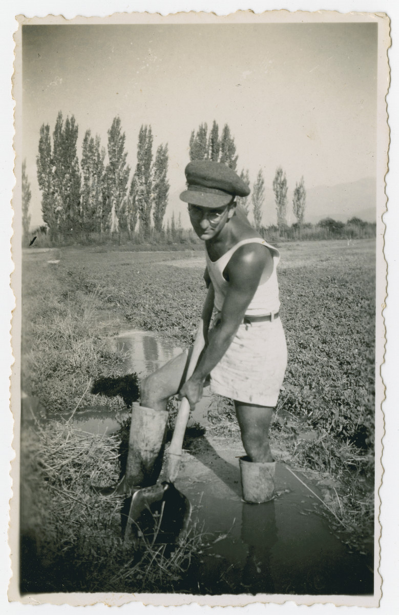 """Photograph from an album entitled, """"Hacshara Kidma Chile,""""  documenting life on a postwar Shomer Hatzair Zionist agricultural collective in Chile.  A young man digs an irrigation ditch (?).  The inscription on the album page (in Spanish) reads, """"Shoveling."""""""