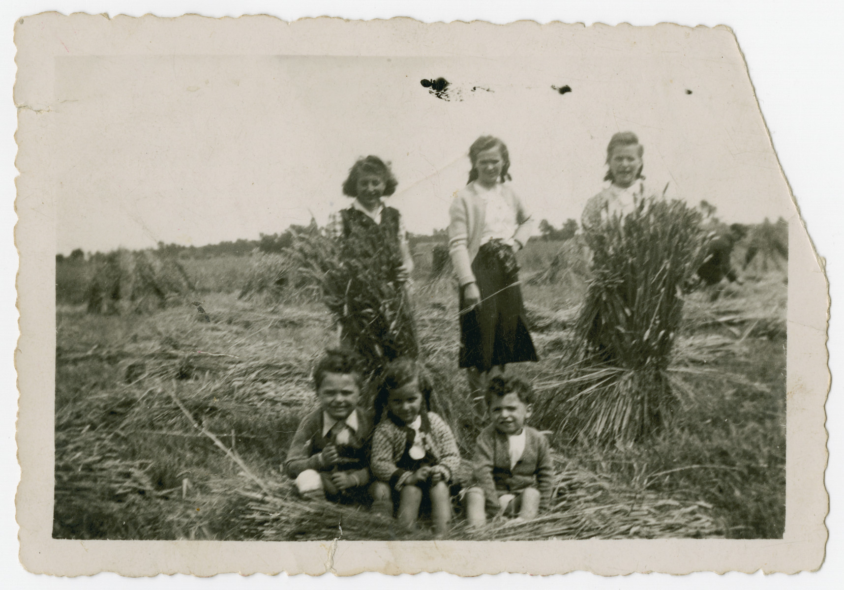 Three young Jewish children pose outside in a field in the Belgian countryside, where they are being hidden on the farm of a German maid.  Pictured in the foreground are Nestor Hochglaube (right), his brother Jacques (left), and ? Krevin in the middle.
