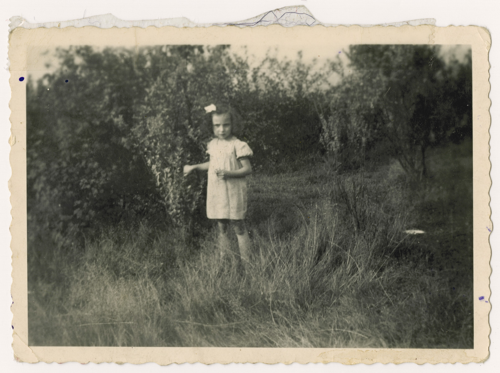 A young Jewish girl who is living in hiding poses outside in a field.  Pictured is Bettie Kipper, a cousin of Nestor Hochglaube.