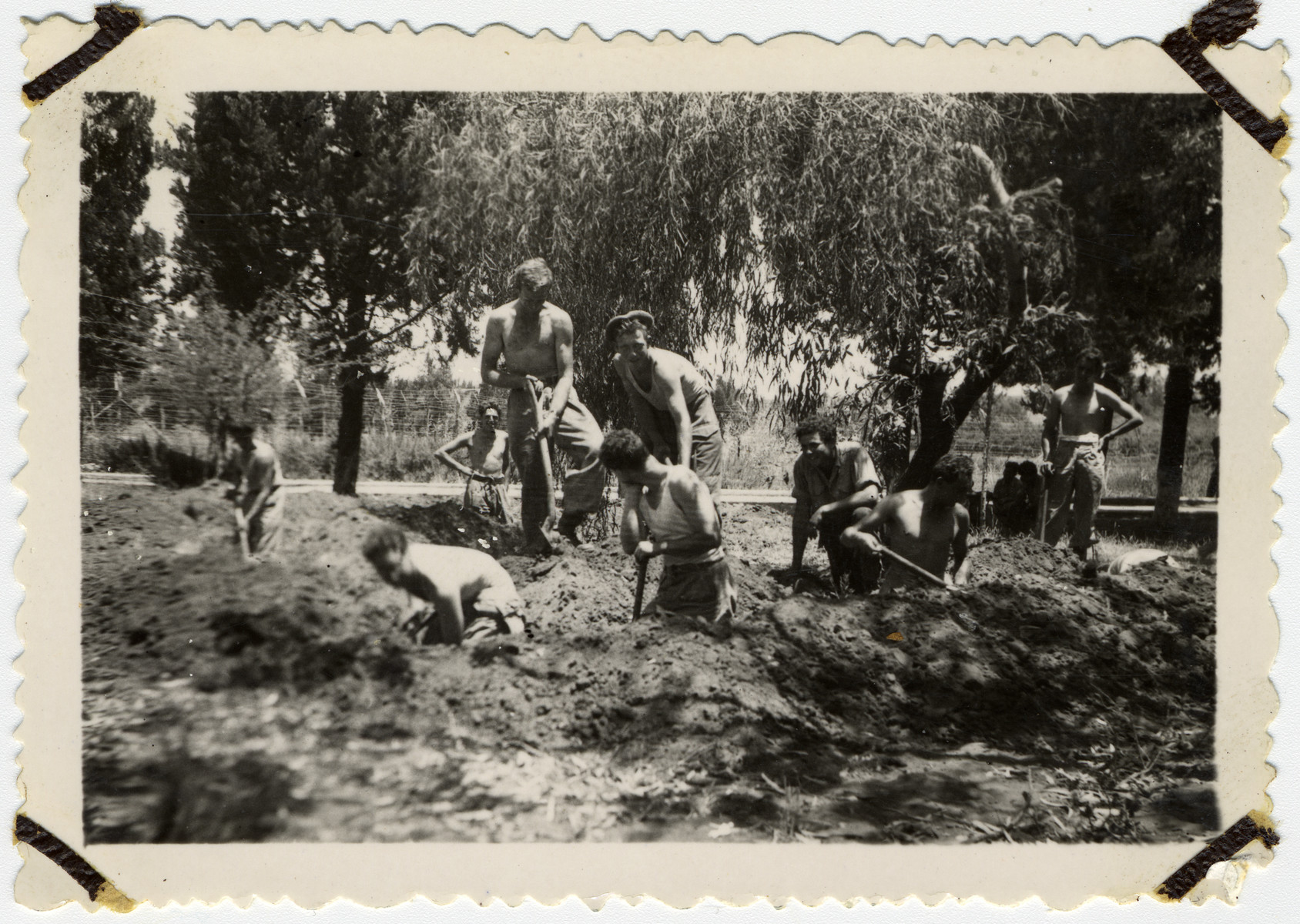 New Palmach recruits dig trenches during their tranining.  Among those pictured is Mordechay Frost.