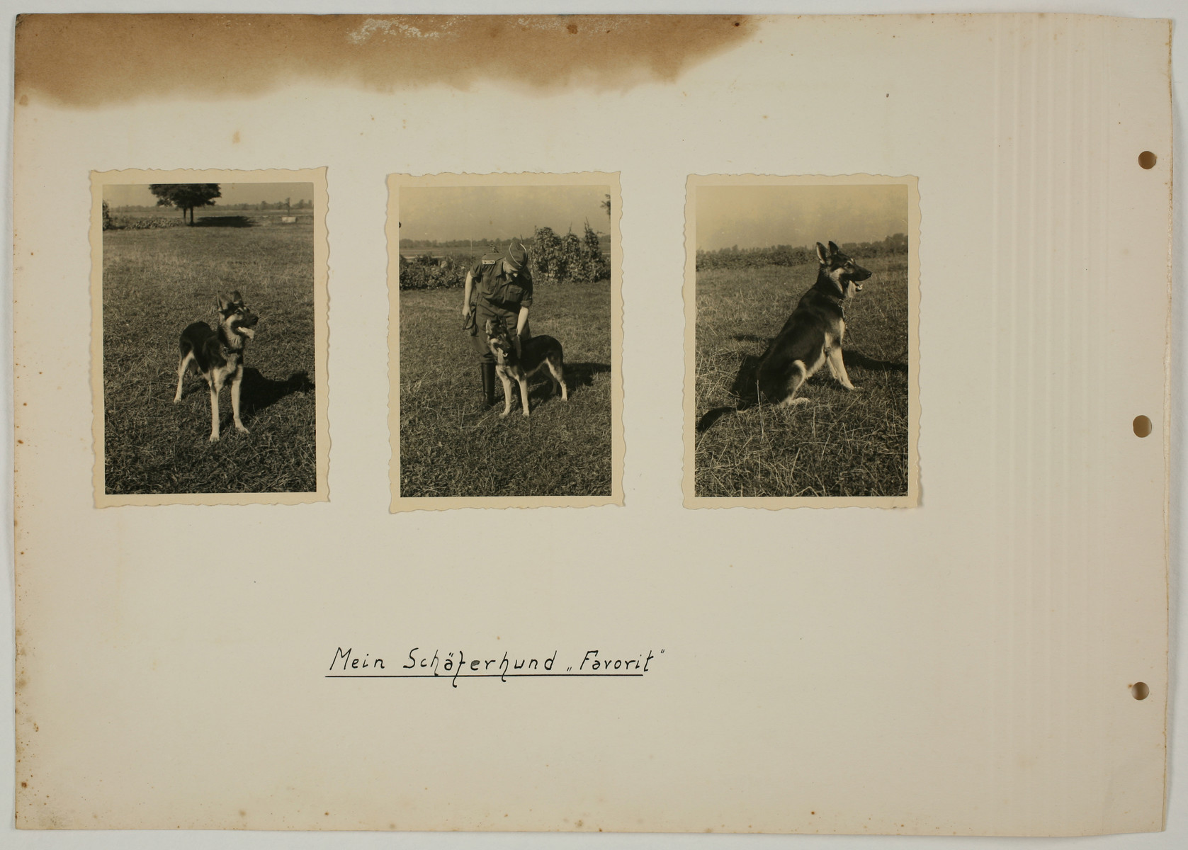 """One page from an album created by adjutant to the commandant Karl Hoecker, depicting SS activities in and around the Auschwitz concentration camp.  The original caption reads """"Mein Schaeferhund ,Favorit'"""" [My Shephard dog ,Favorit']."""