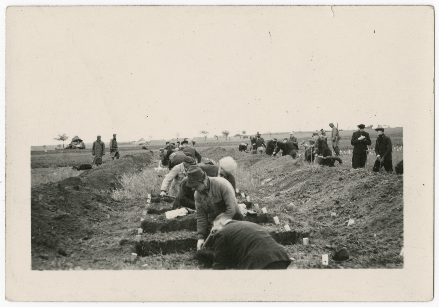 German civilians dig graves for the victims of the Gardelegen atrocity under orders of the American army.