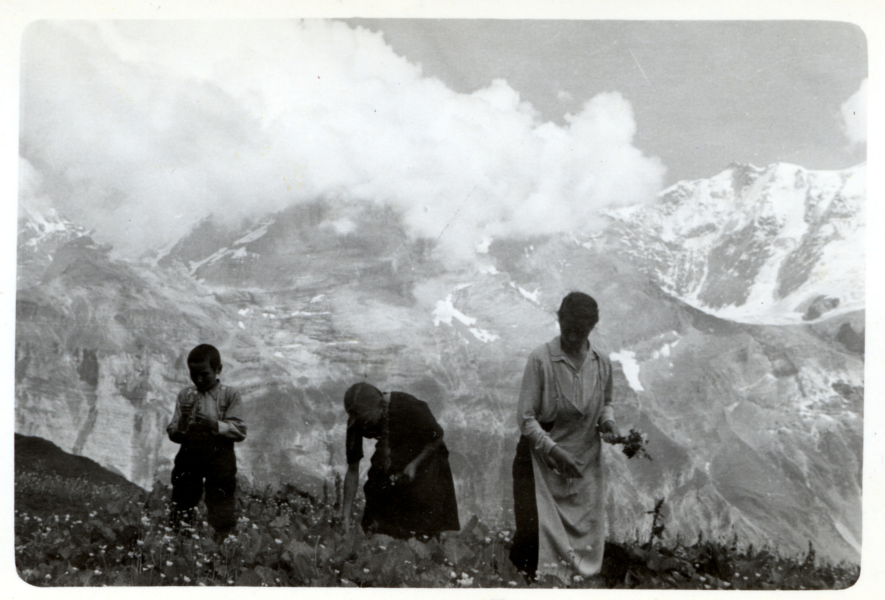 A family picks flowers in the mountains.
