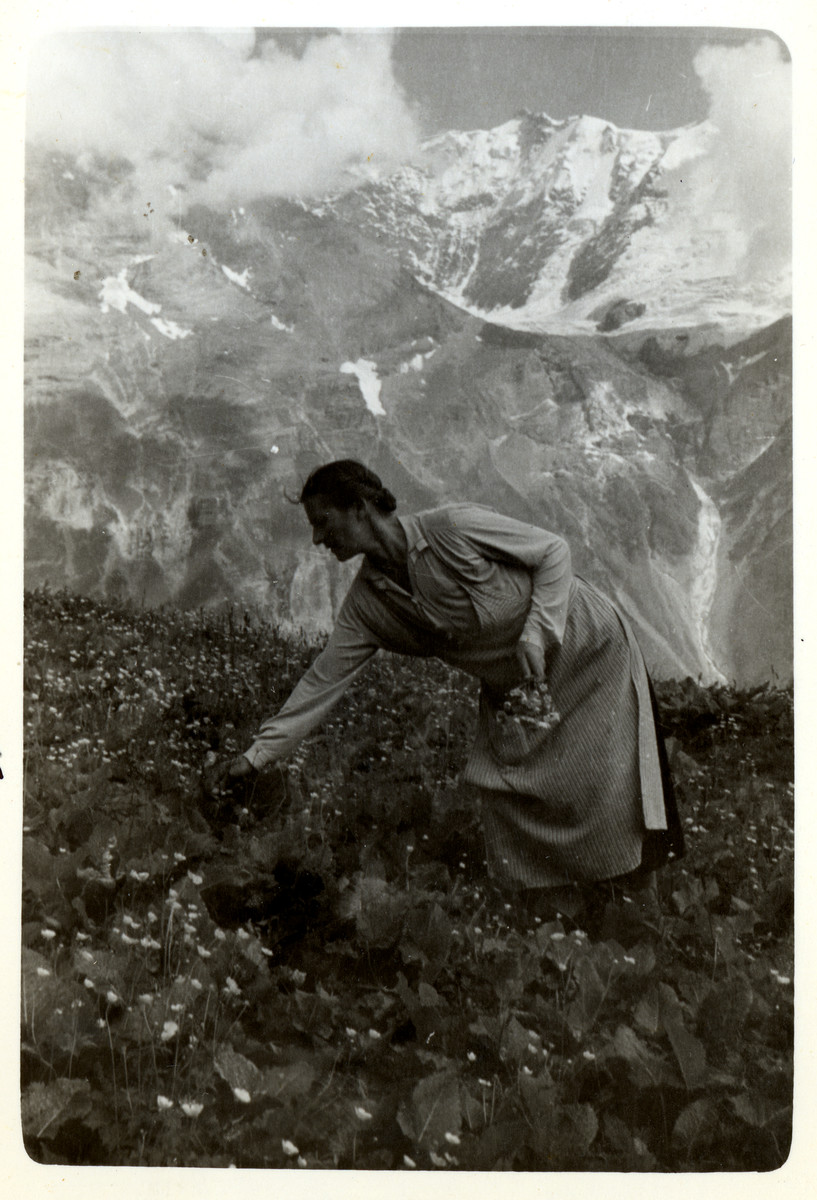 A woman picks flowers in the mountains.