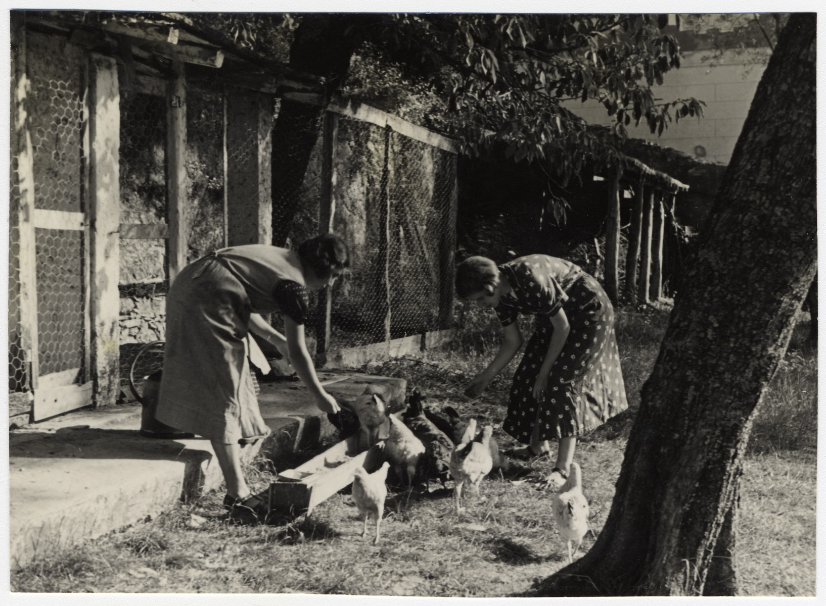Two teenage girls feed the chickens on the grounds of the Mediterranean School in Recco, Italy.