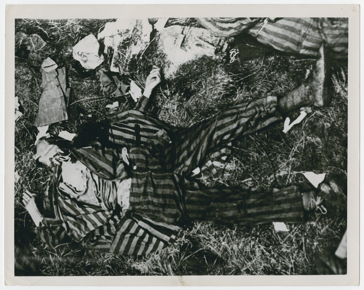Portrait of corpses of Russian, Polish, French and Italian prisoners shot by Germans shortly before the arrival of American troops lie in the woods near Braunlage..