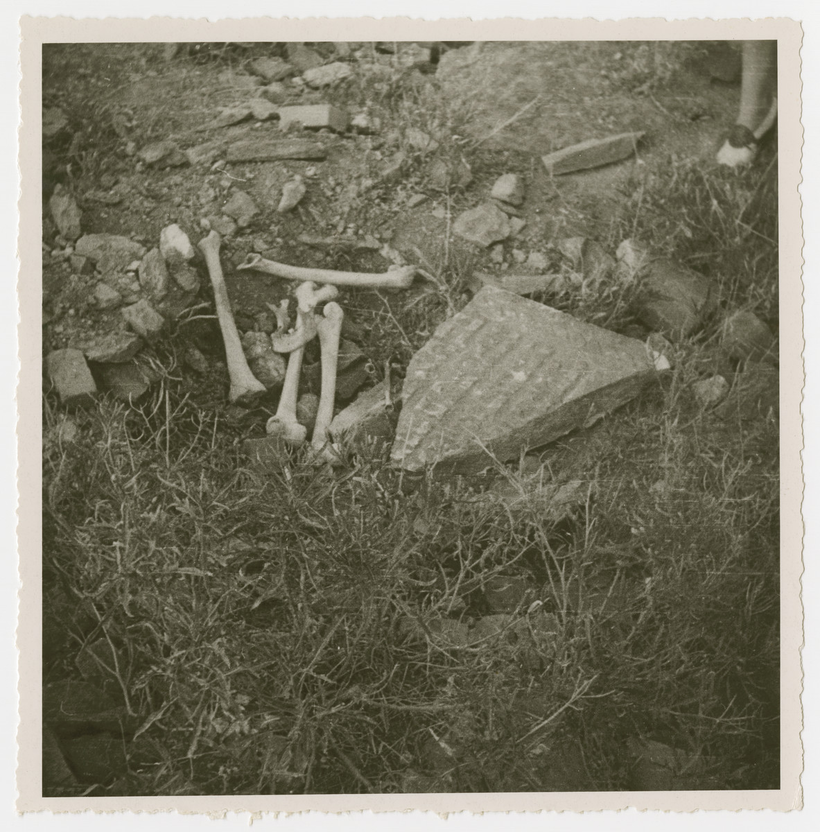 "View of a desecrated Jewish grave.  The original caption reads ""one of the many graves opened and looted for gold teeth etc."""