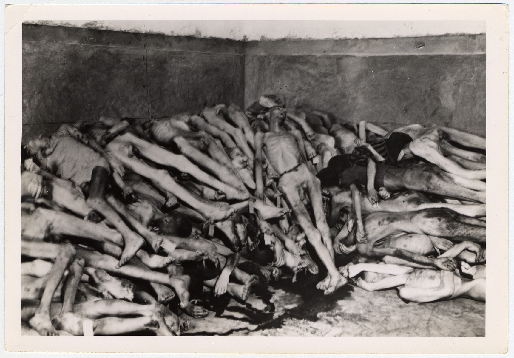 """Pile of deceased prisoners in the Dachau concentration camp, found near the crematorium.  Original caption reads: """"Dachau Atrocity Camp: Stacked like cordwood, naked bodies of inmates of the infamous Dachau concentration camp were awaiting cremation when the 7th U.S. Army troops liberated the camp. A pool of blood gathers on the floor.""""   Original caption from donated photograph reads:  """"Stacked like corwood, these bodies were awaiting cremation when Seventh Army troops liberated the camp.  A pool of blood gathers on the floor."""""""