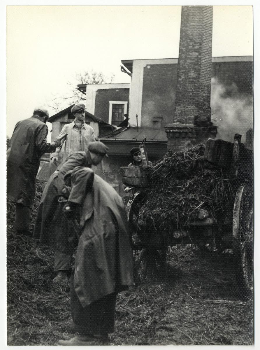 Czech Jews work in the yard of the Lipa farm labor camp.