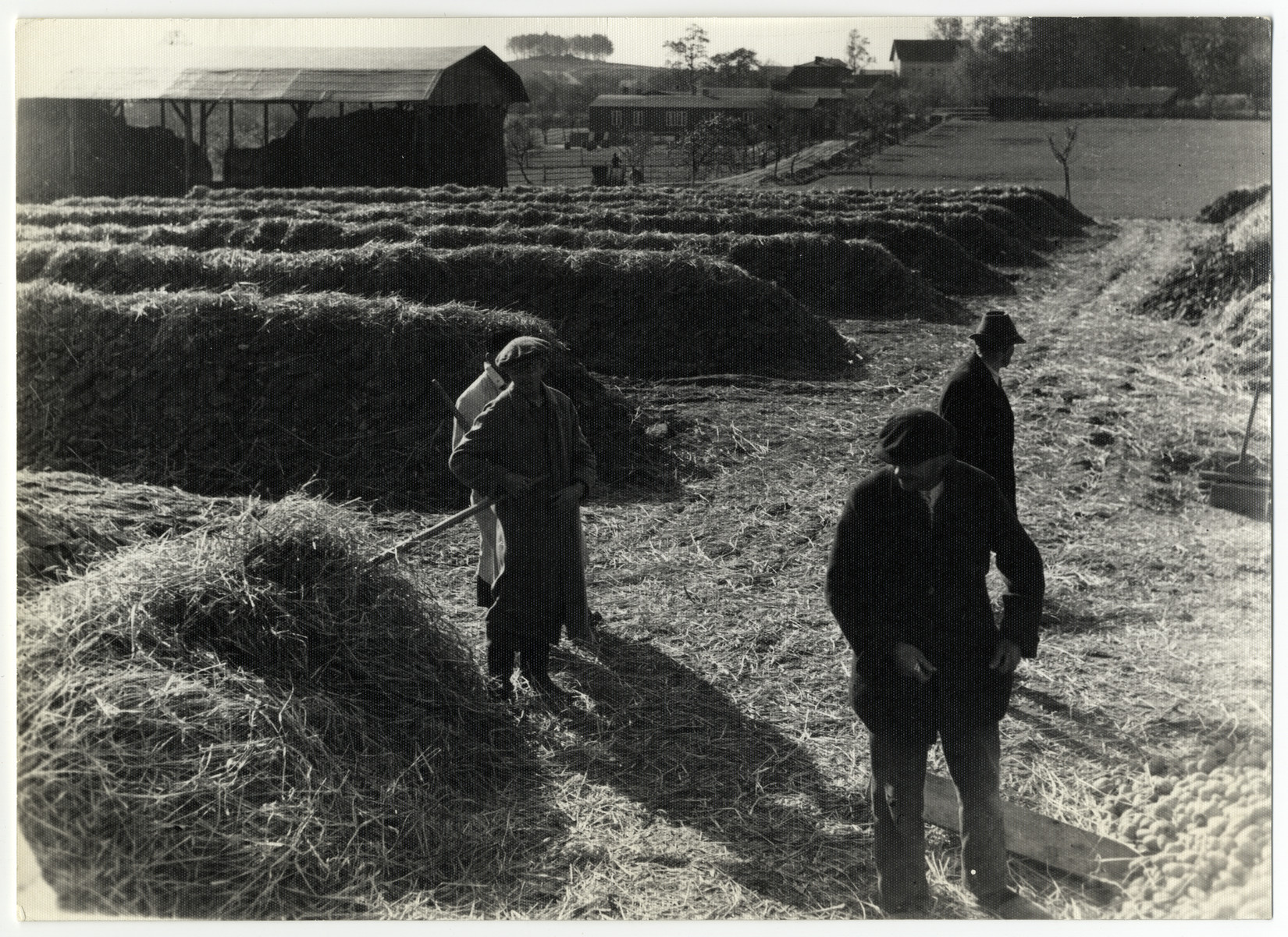Workers walk past piles of hay covering potatoes buried underneath in the Lipa farm labor camp.