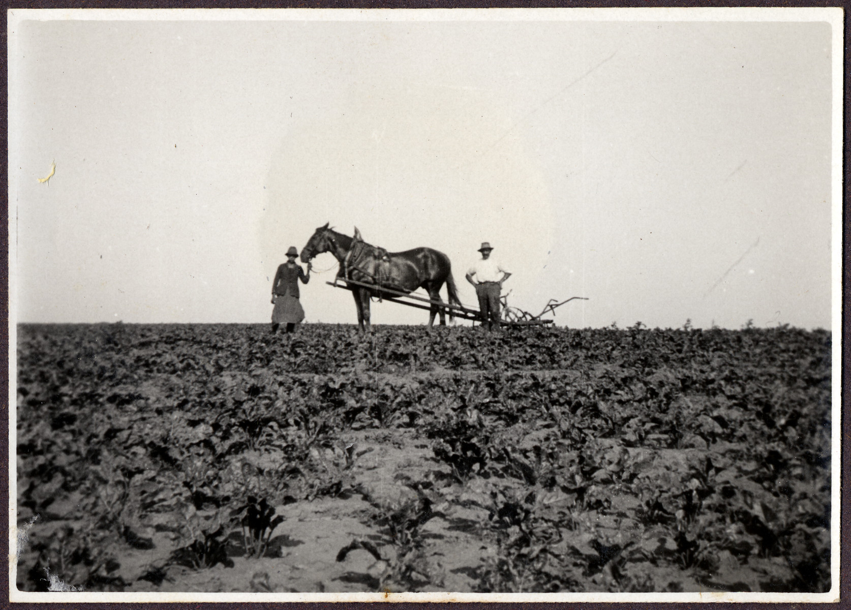 A horse pulls a plow on a farm in Burgenland operated by Ludwig Engel.