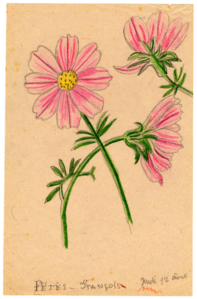 Color child's drawing of pink flowers in Chateau de la Hille.