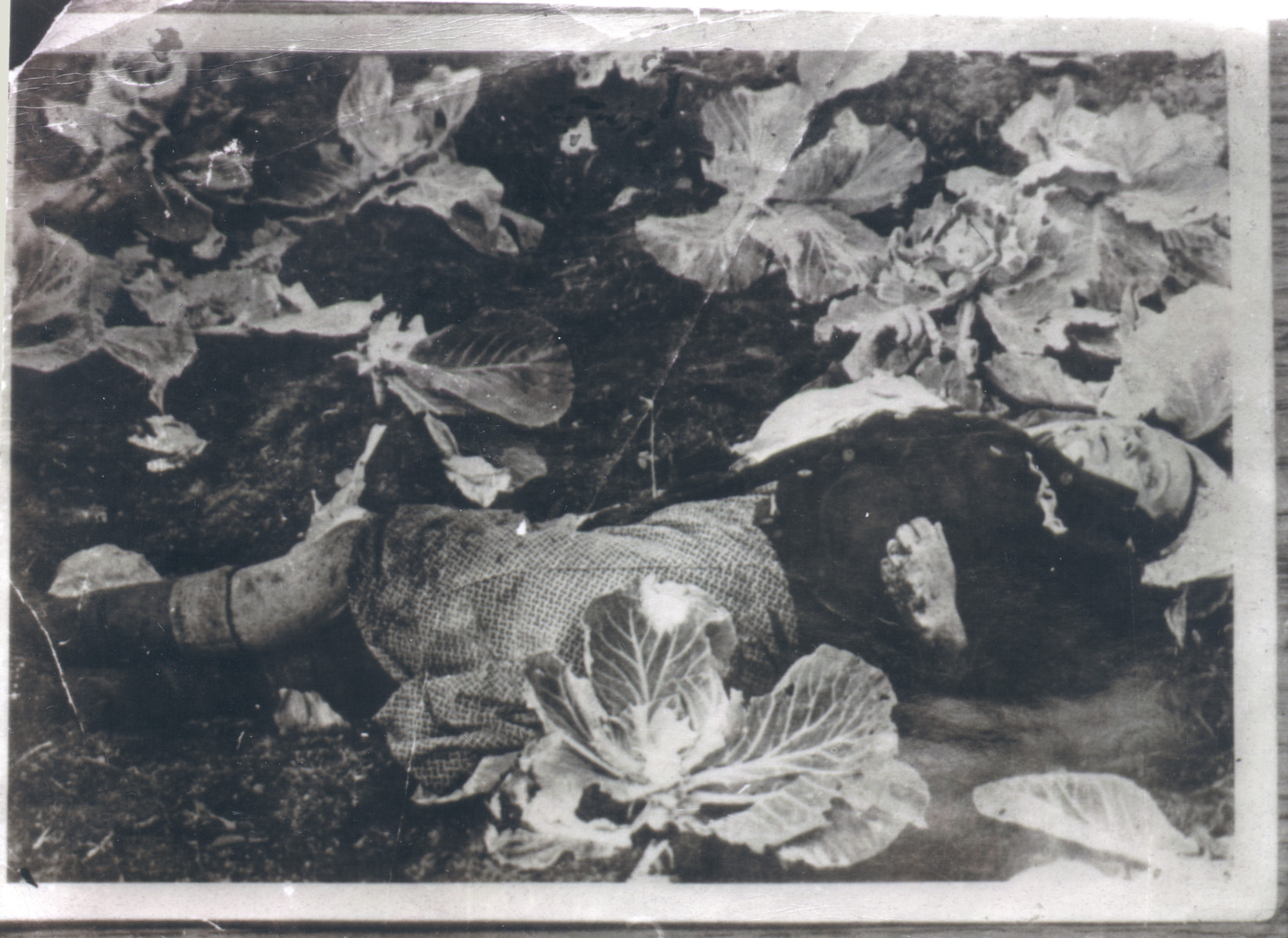A female corpse lies among some plants in the Klooga camp following liberation.