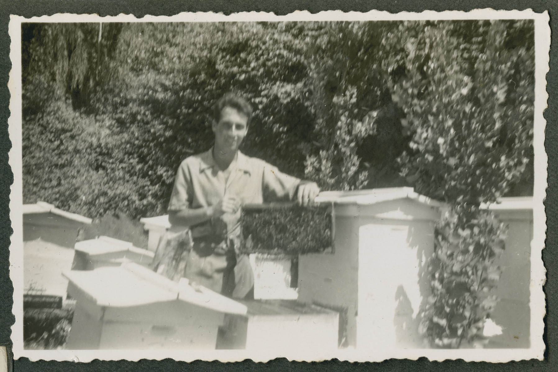 "Photograph from an album entitled, ""Hacshara Kidma Chile,""  documenting life on a postwar Zionist agricultural collective in Chile.  A young man tends to bee-keeping boxes.  The inscription on the album page (in Spanish) reads, ""My Hobby; the trees and the bees."""