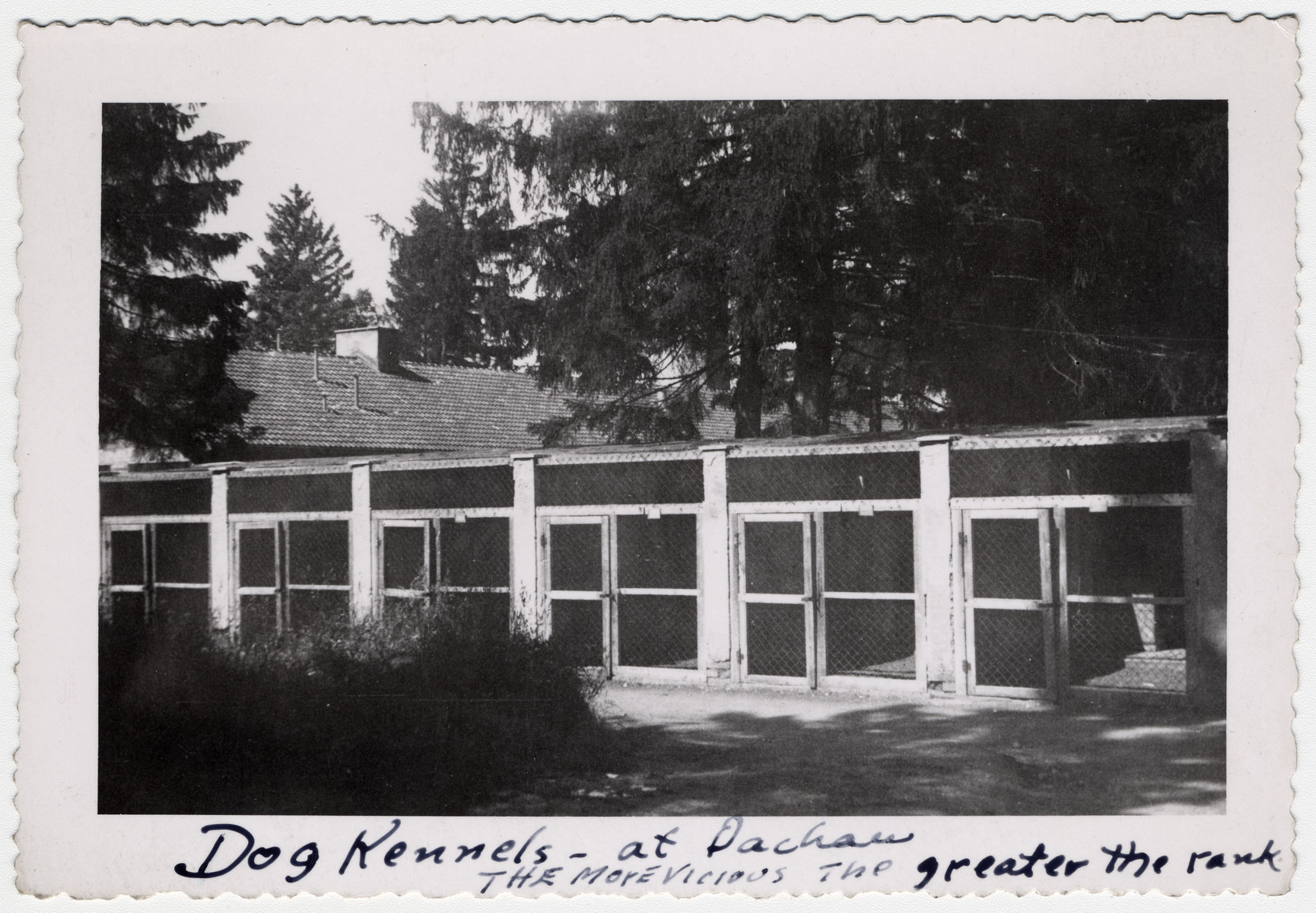 "View of the Dachau dog kennels after liberation.  The original caption reads ""Dog kennels -- at Dachau.  The more viscious the greater the rank""."