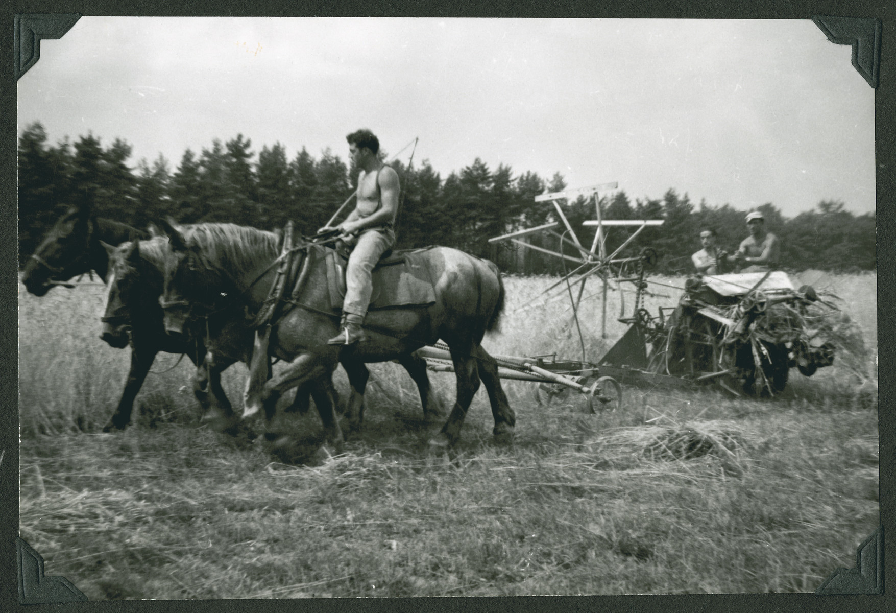 """A farmer works a field in Kibbutz Buchenwald.  The original caption says: """"Kibbutz Buchenwald.  Reaping the wheat.  The Zionist flag flying proudly over the Jewish Farm.  A little piece of Palestine in Deutschland."""""""