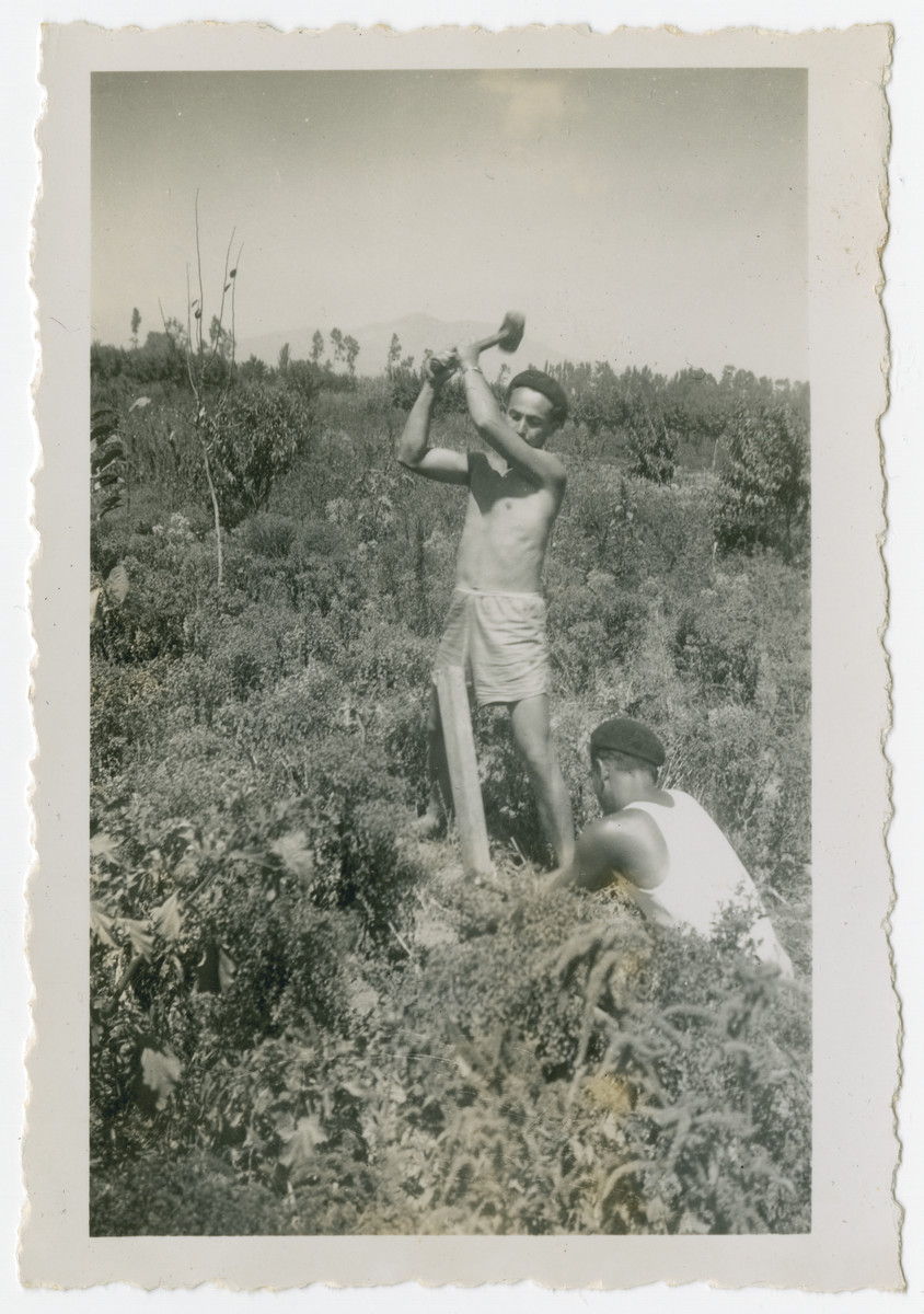 "Photograph from an album entitled, ""Hacshara Kidma Chile,""  documenting life on a postwar Zionist agricultural collective in Chile.  Two young men set a post in the ground. The inscription on the album page reads, ""Don Aaron installs the light [electricity]."""
