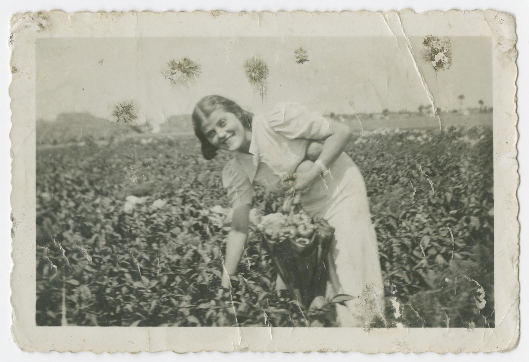 Friderika Klein picks produce in prewar Hungary.
