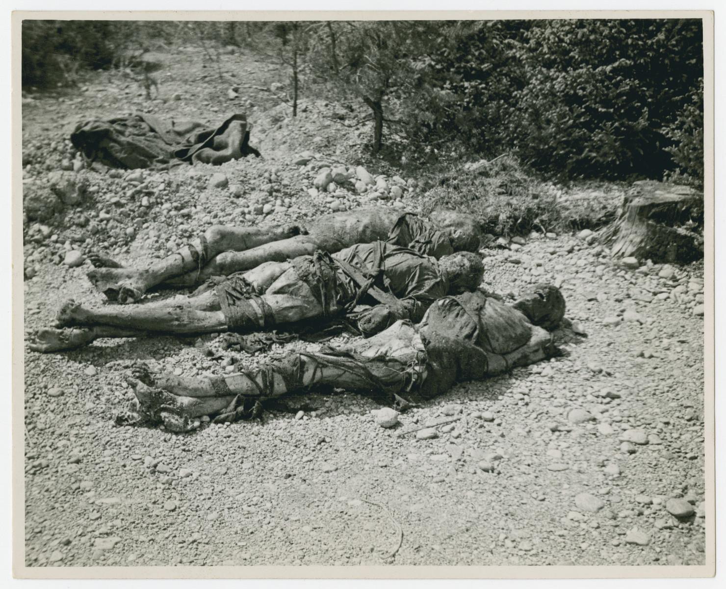 Exhumed corpses await reburial in Muehldorf.