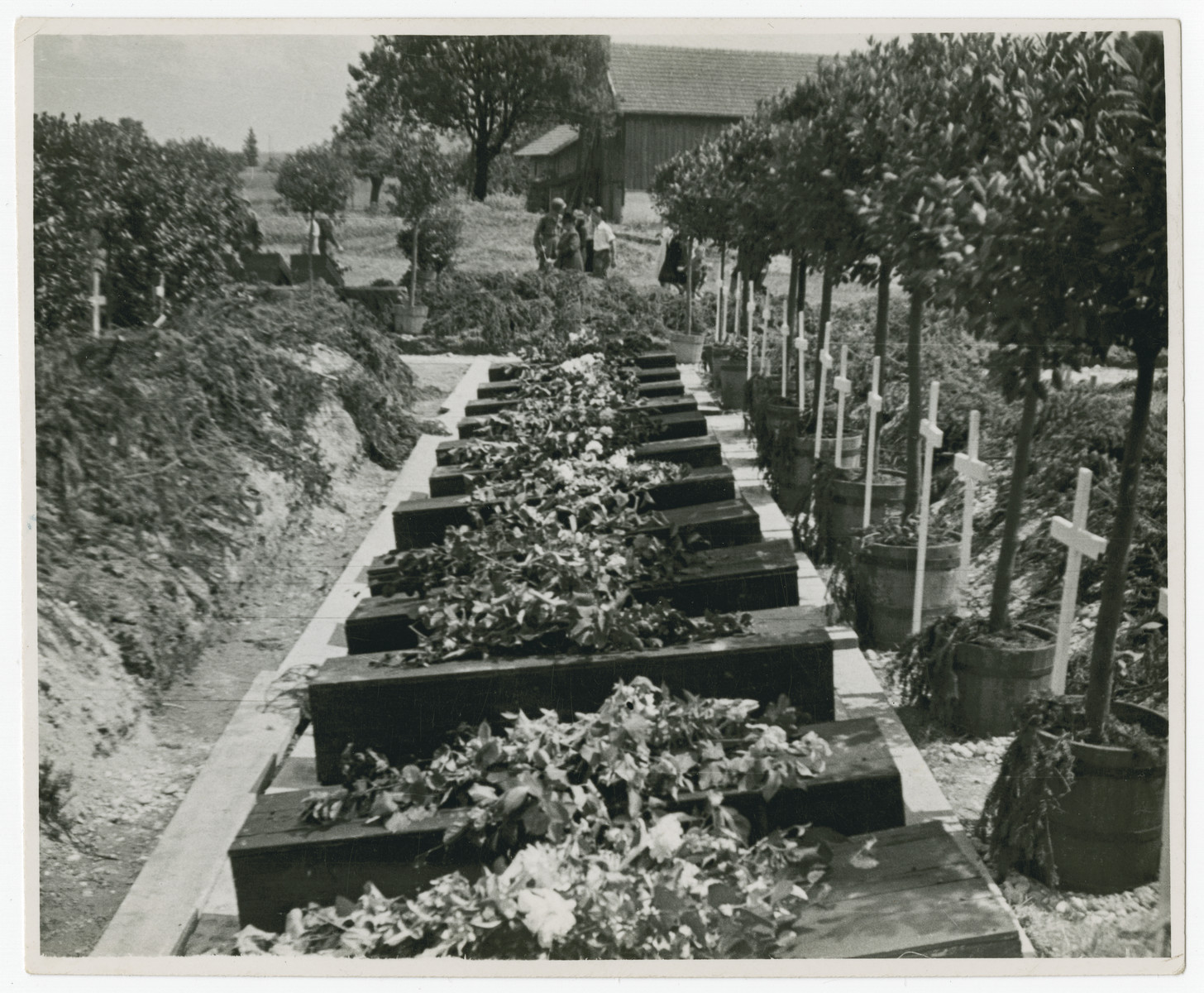 View of coffins ready for reburial holding corpses exhumed from a mass grave.