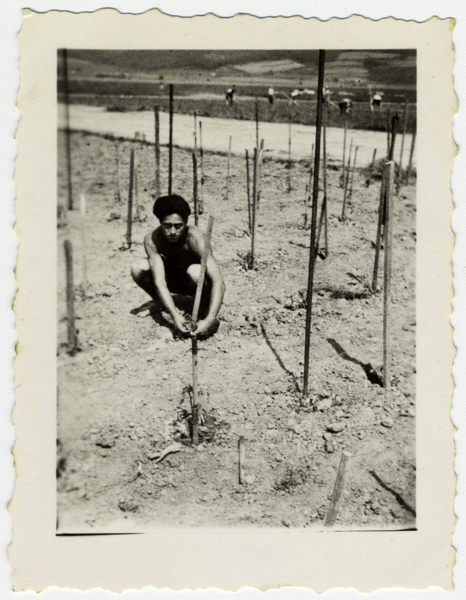 A young man works in the vegetable patch at a kibbutz hachshara in Eschwege.
