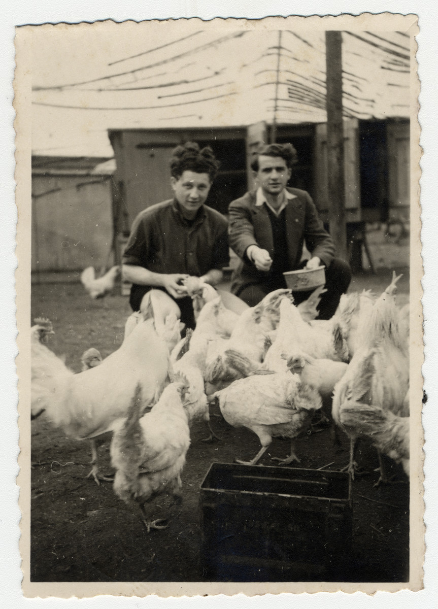 Willy Bogler and a friend feed the chickens at a kibbutz hachshara in Eschwege.