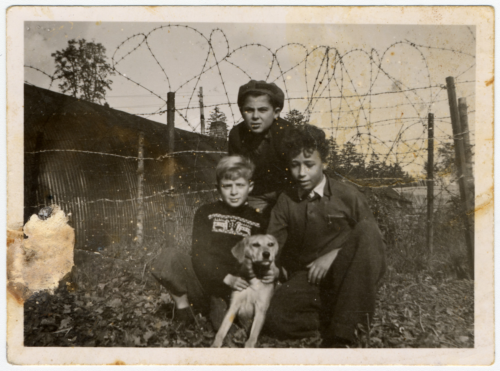 Three children who were on the Exodus pose with a dog in front of a barbed wire fence after having been sent back to Germany by the British.  Uri Urmacher is pictured in the top center.
