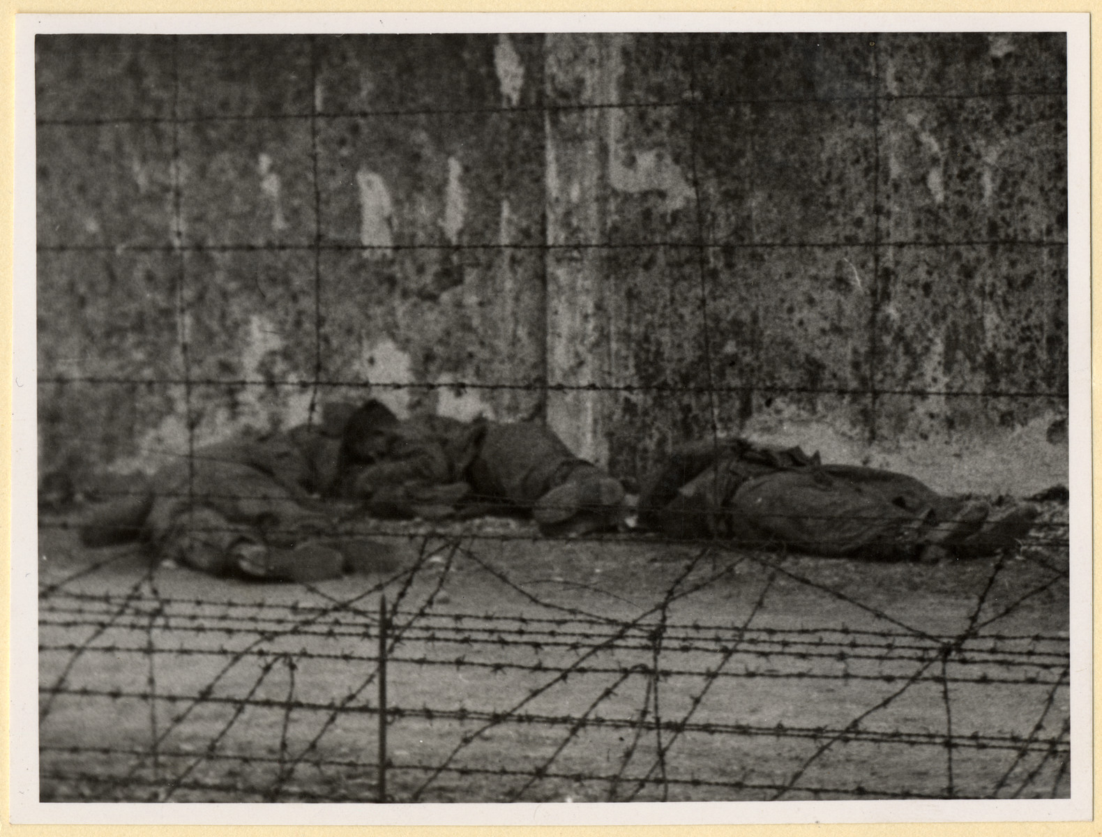 View of the corpses of SS men shot by former prisoners shortly after the liberation of the Dachau concentration camp.