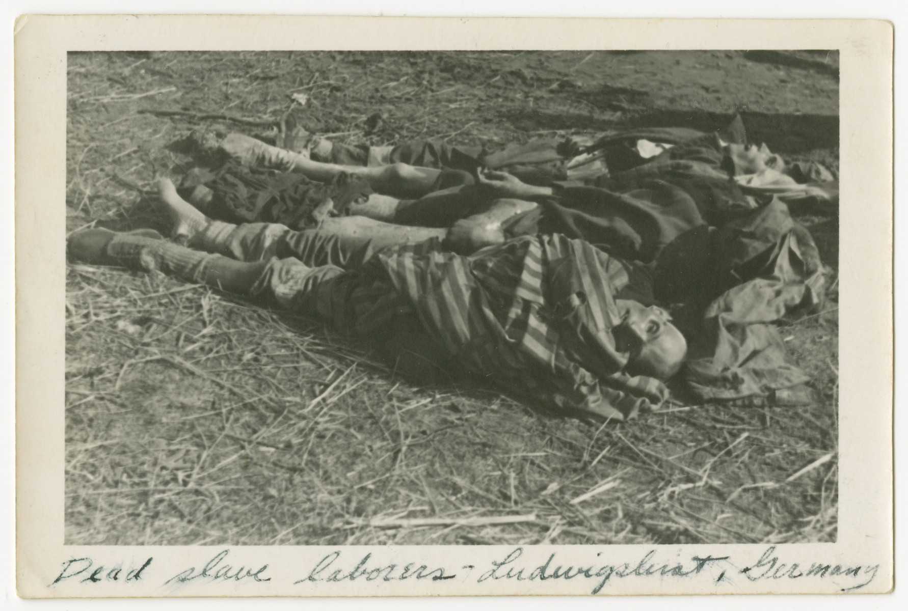 "A line of corpses at Woebbelin concentration camp.  The photograph's original caption reads, ""Dead slave laborers - Ludwigslust, Germany"""