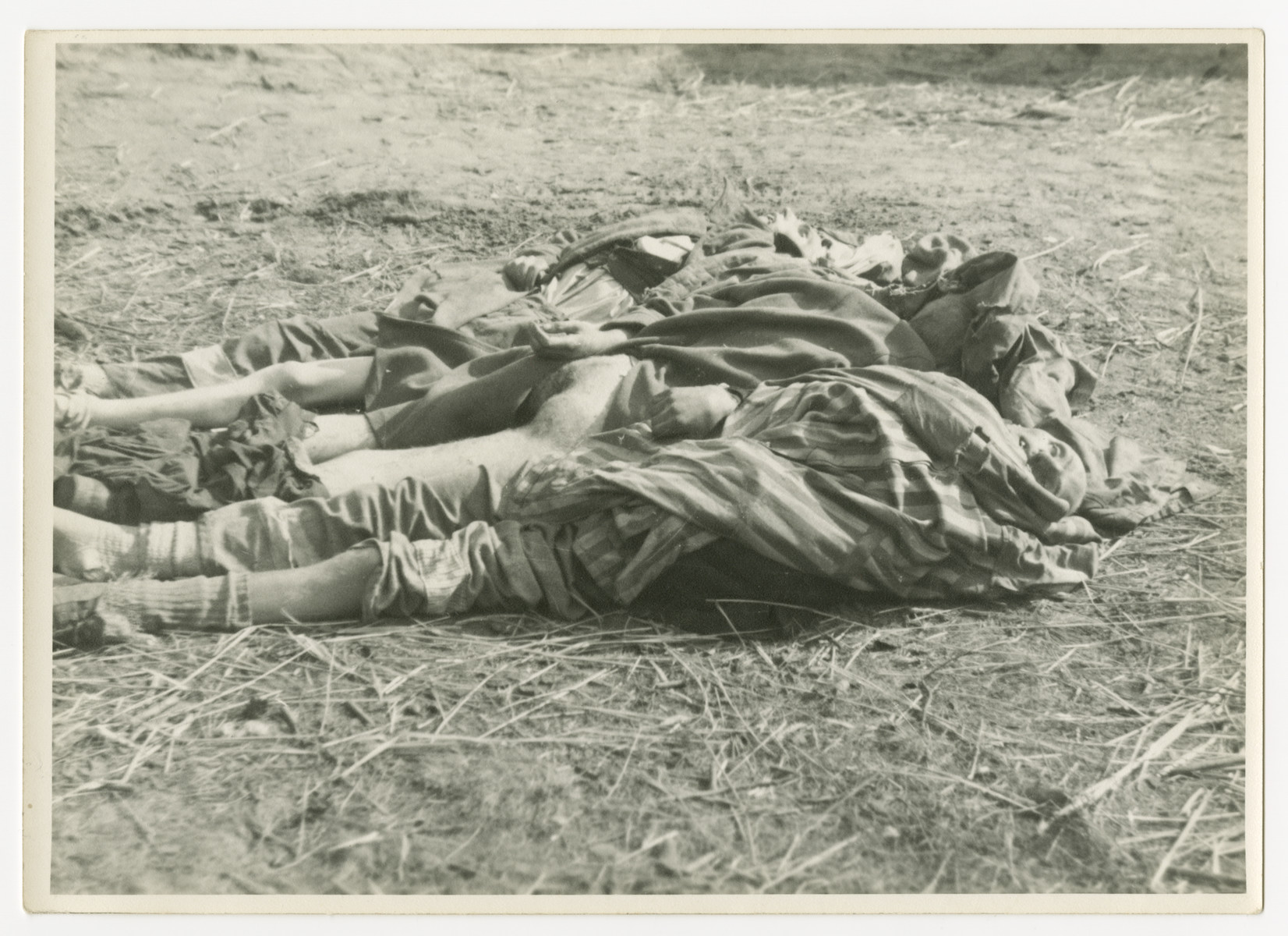Three corpses are lined up on the straw covered ground of the Woebbelin concentration camp.