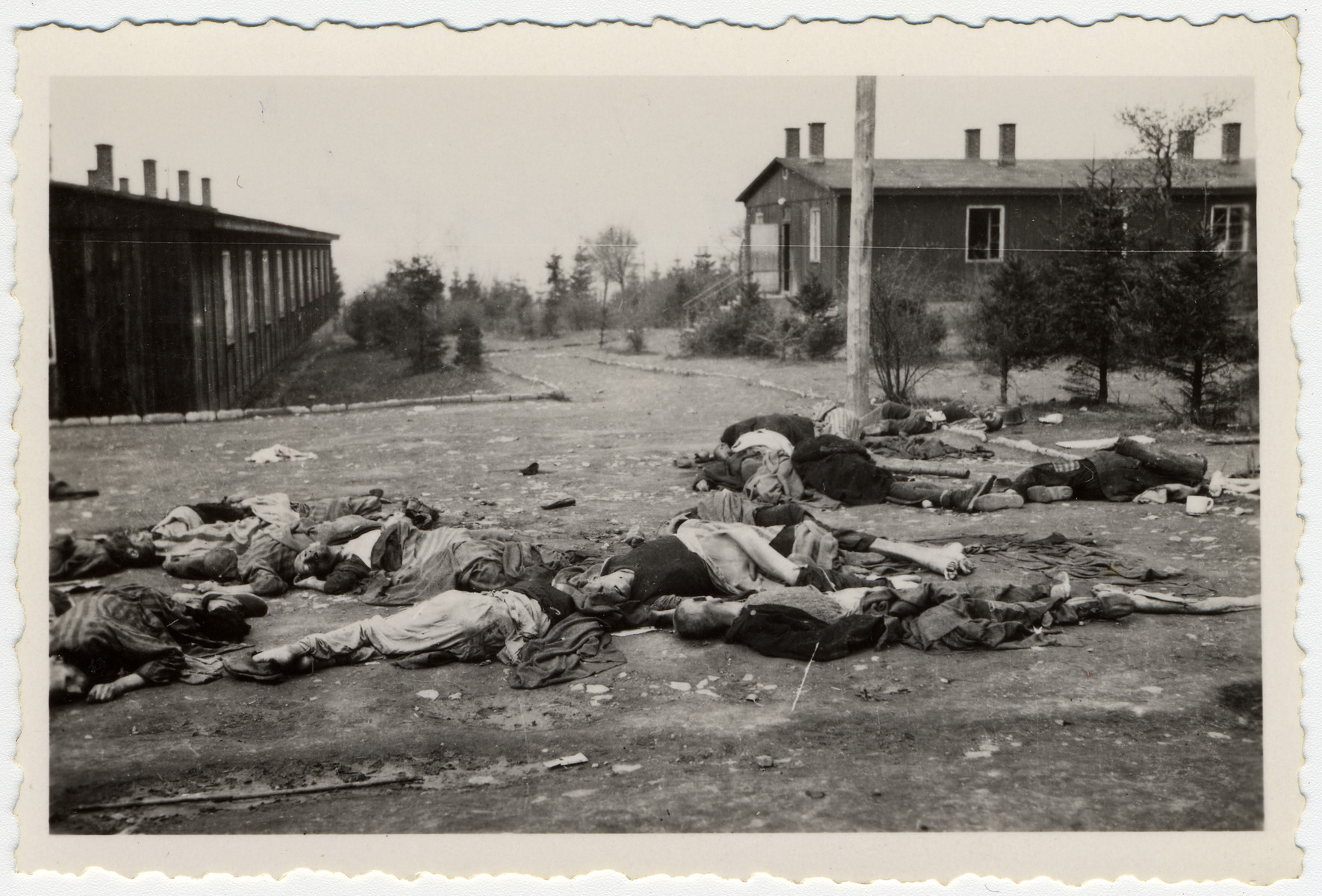 Corpses lie strewn about in the street of the Buchenwald concentration camp following liberation.