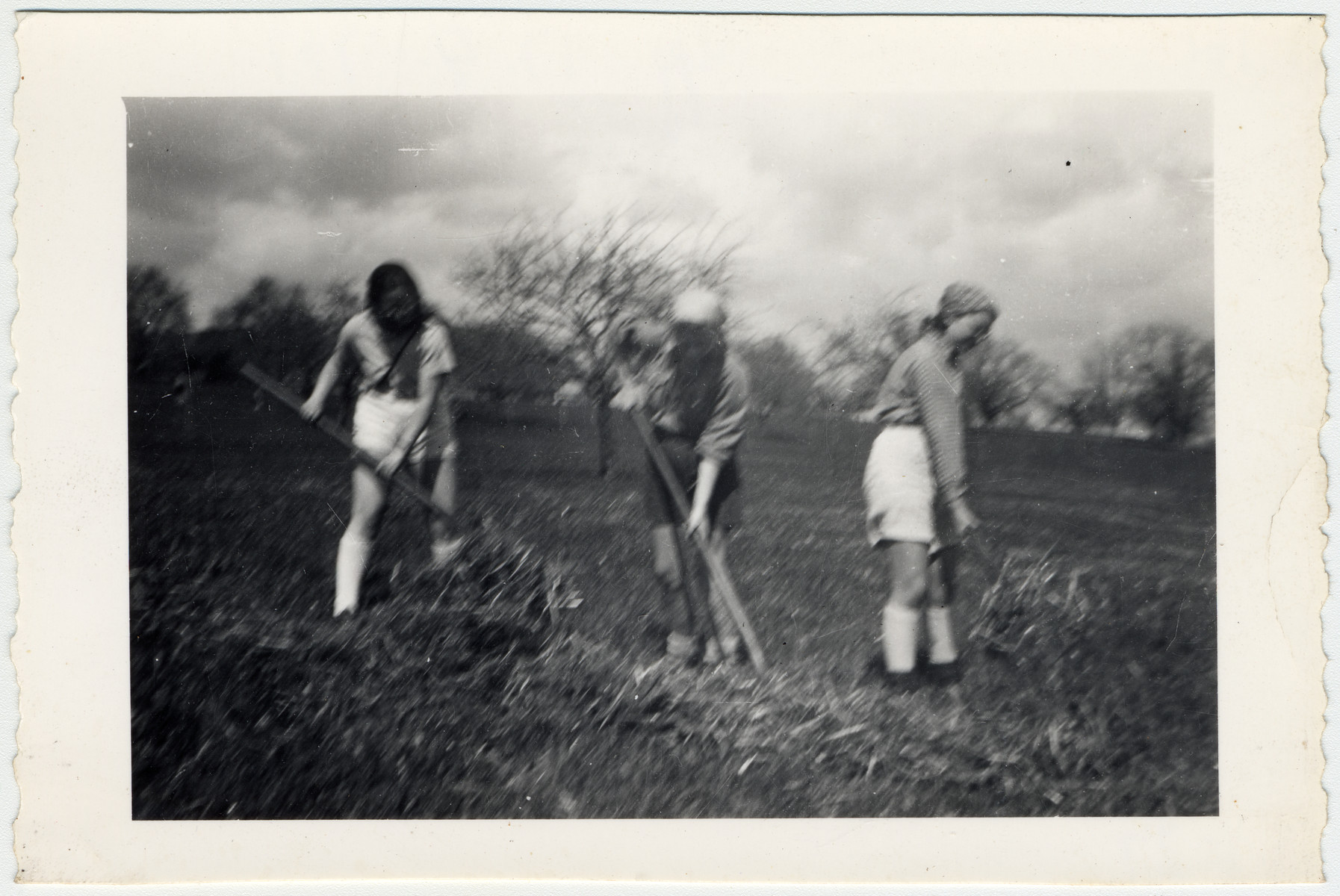 Dory Vulknan, Minni, and Ruth Rappaport, members of a Zionist youth movement, work in farm fields in Elgg, Switzerland.