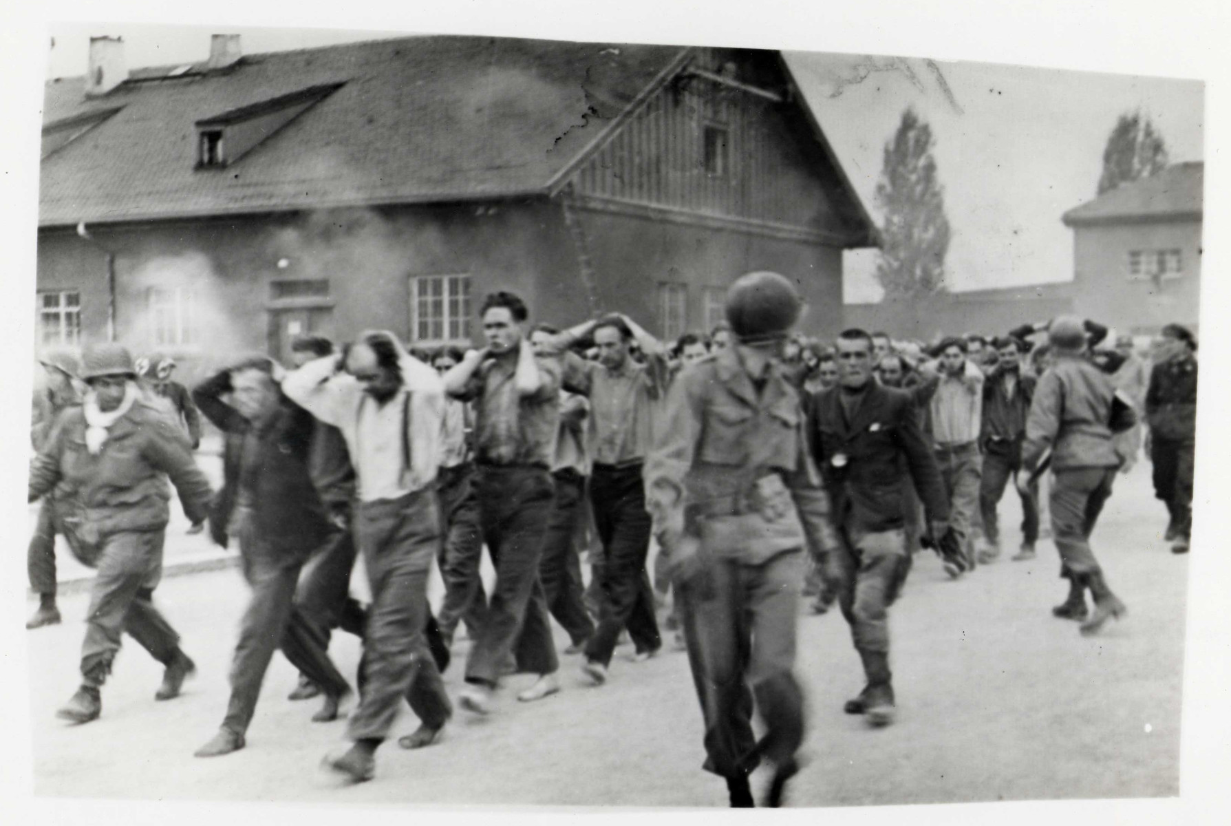 German personnel at Dachau are rounded up by American soldiers.