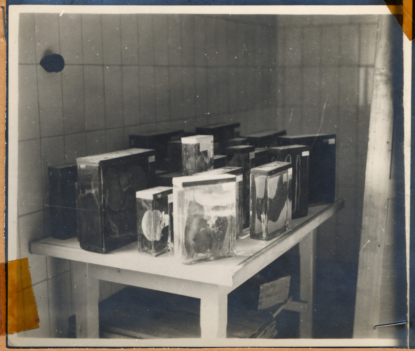 """View of preserved human organs removed from prisoners during medical experiments conducted in Buchenwald concentration camp.  The lender's handwritten caption reads, """"This is part of the laboratory, where Ilse Koch tattoed human skins were cured for lamp shades."""""""