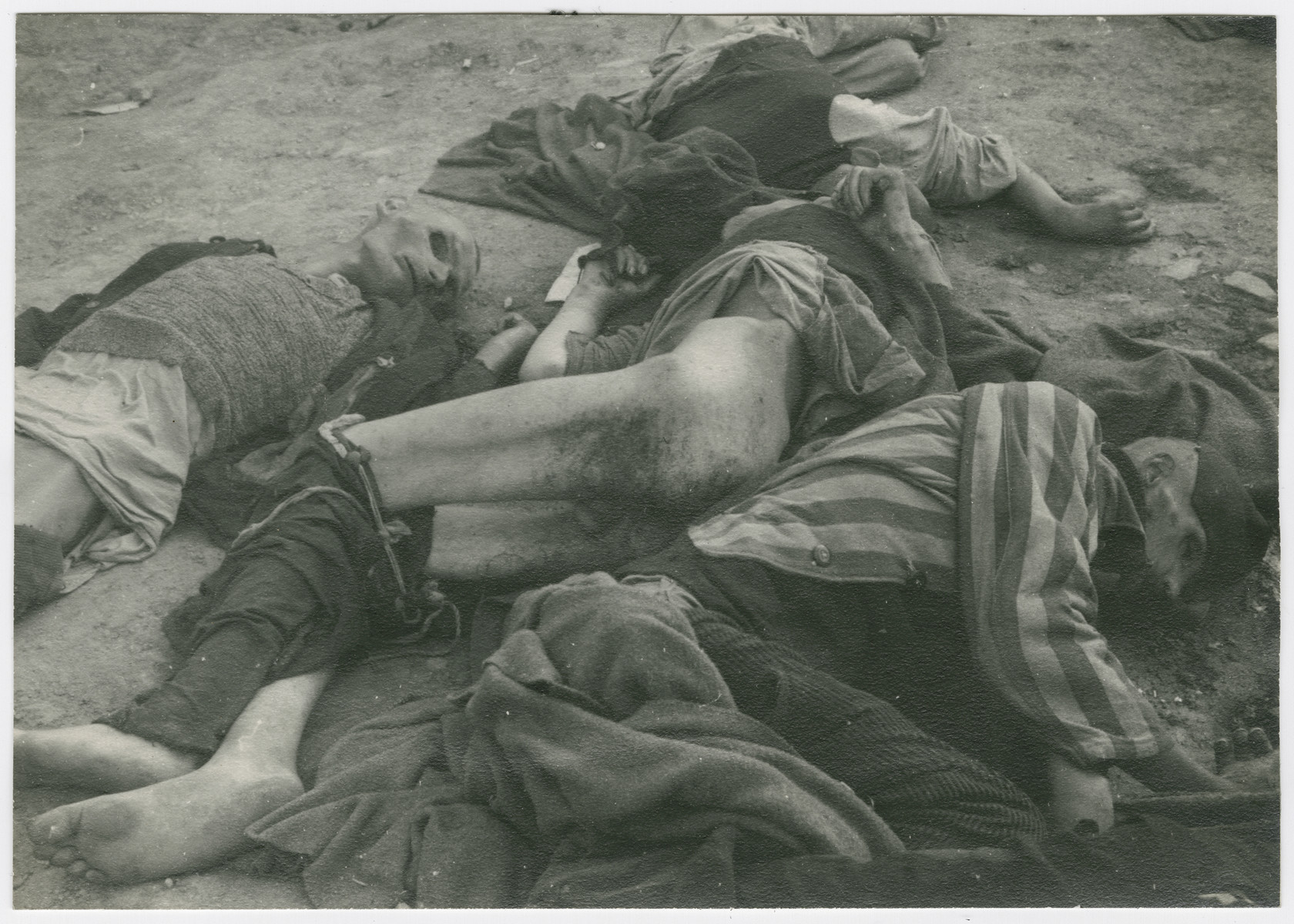 Corpses lie on the grounds of either Buchenwald or Ohrdruf concentration camp.