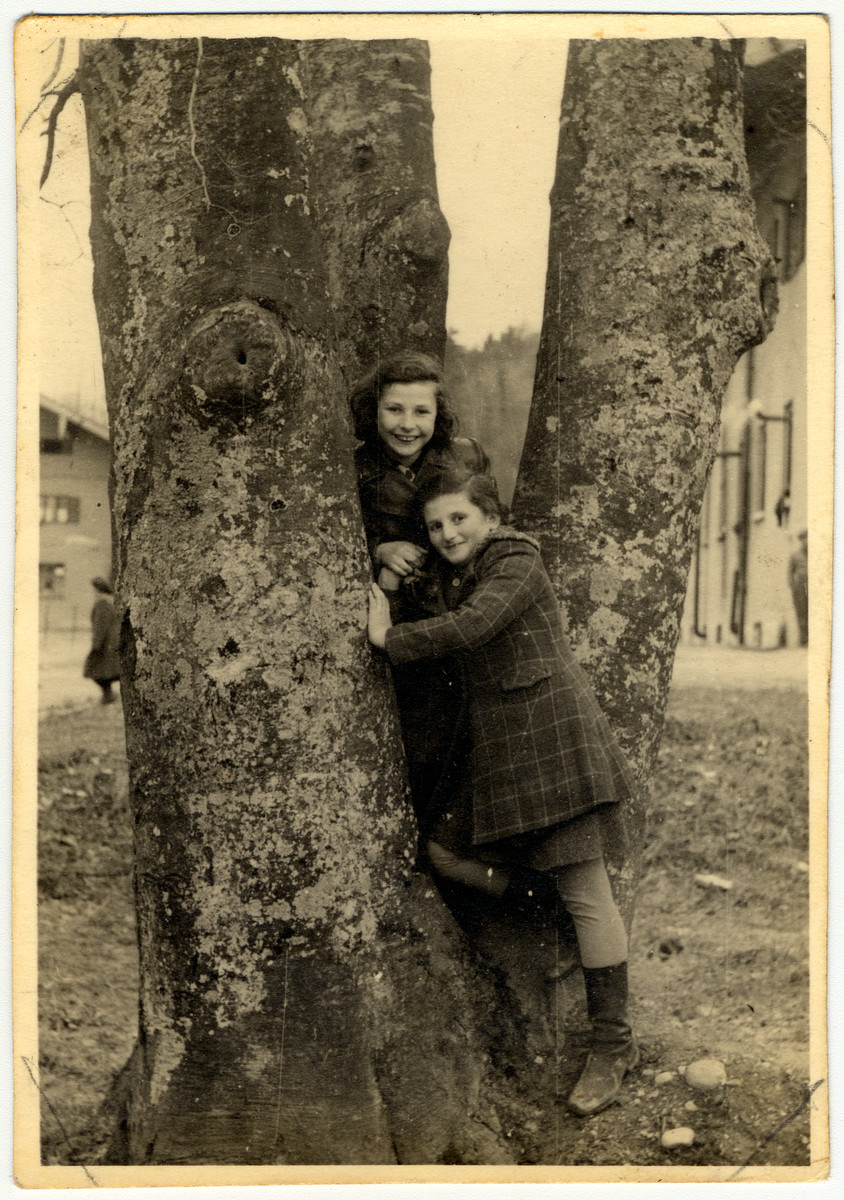 Two girls pose on the bottom of a tree in the Feldafing displaced persons' camp.  Rifka Lifschitz is pictured on the bottom right.  Behind her is Rutka Kron.